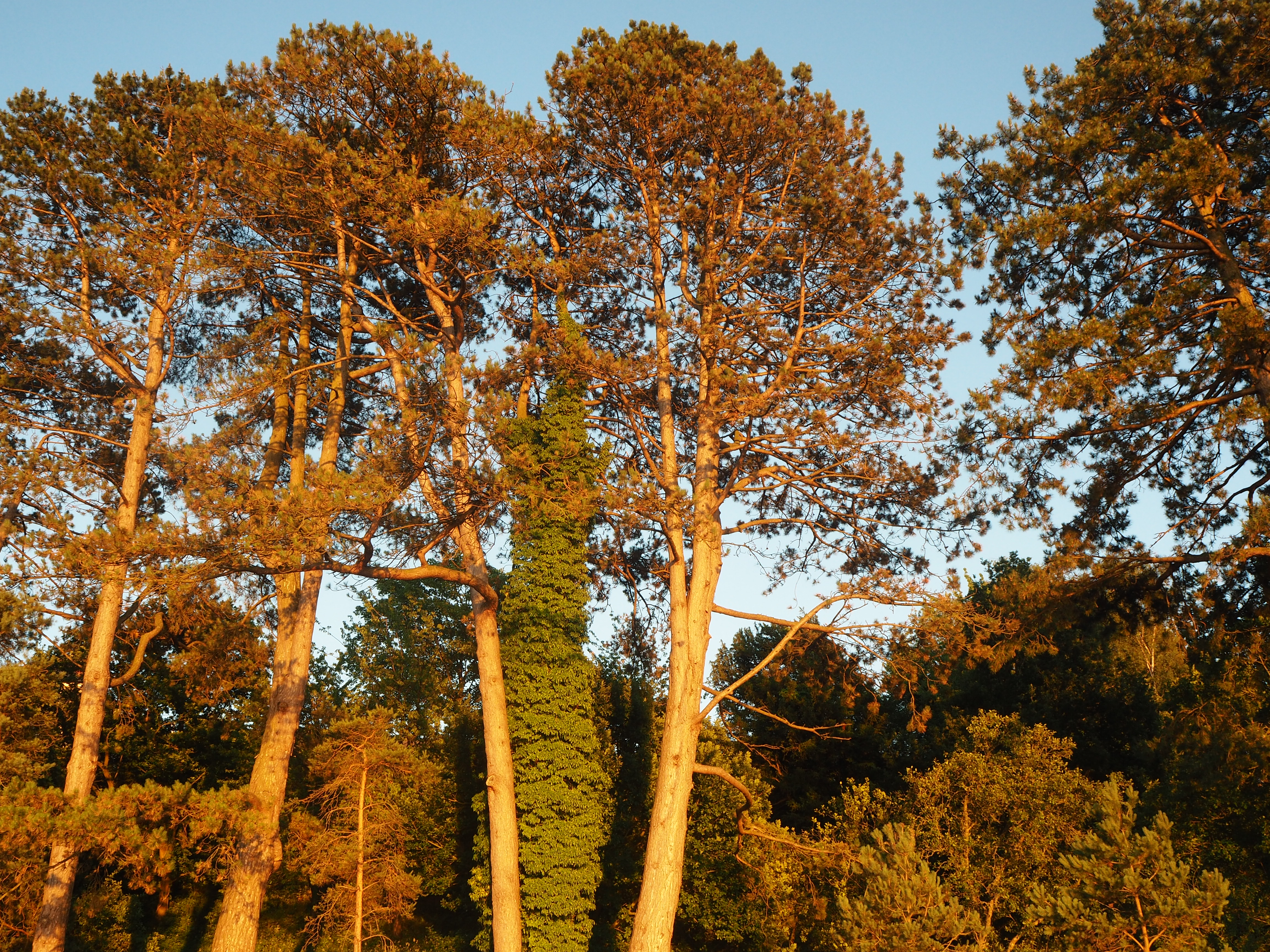 Trees catching the light just before sunset