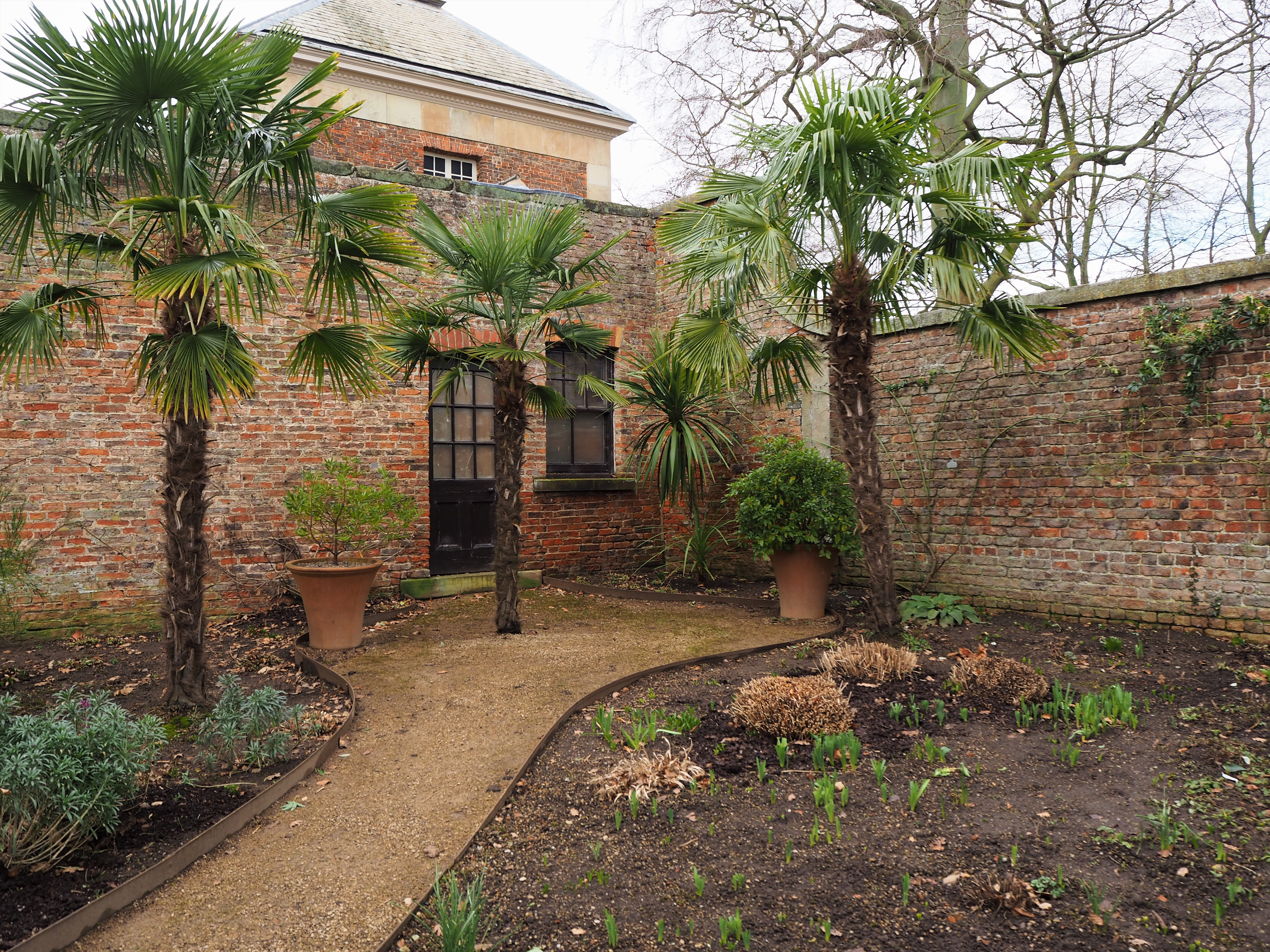 Palm trees at Beningbrough