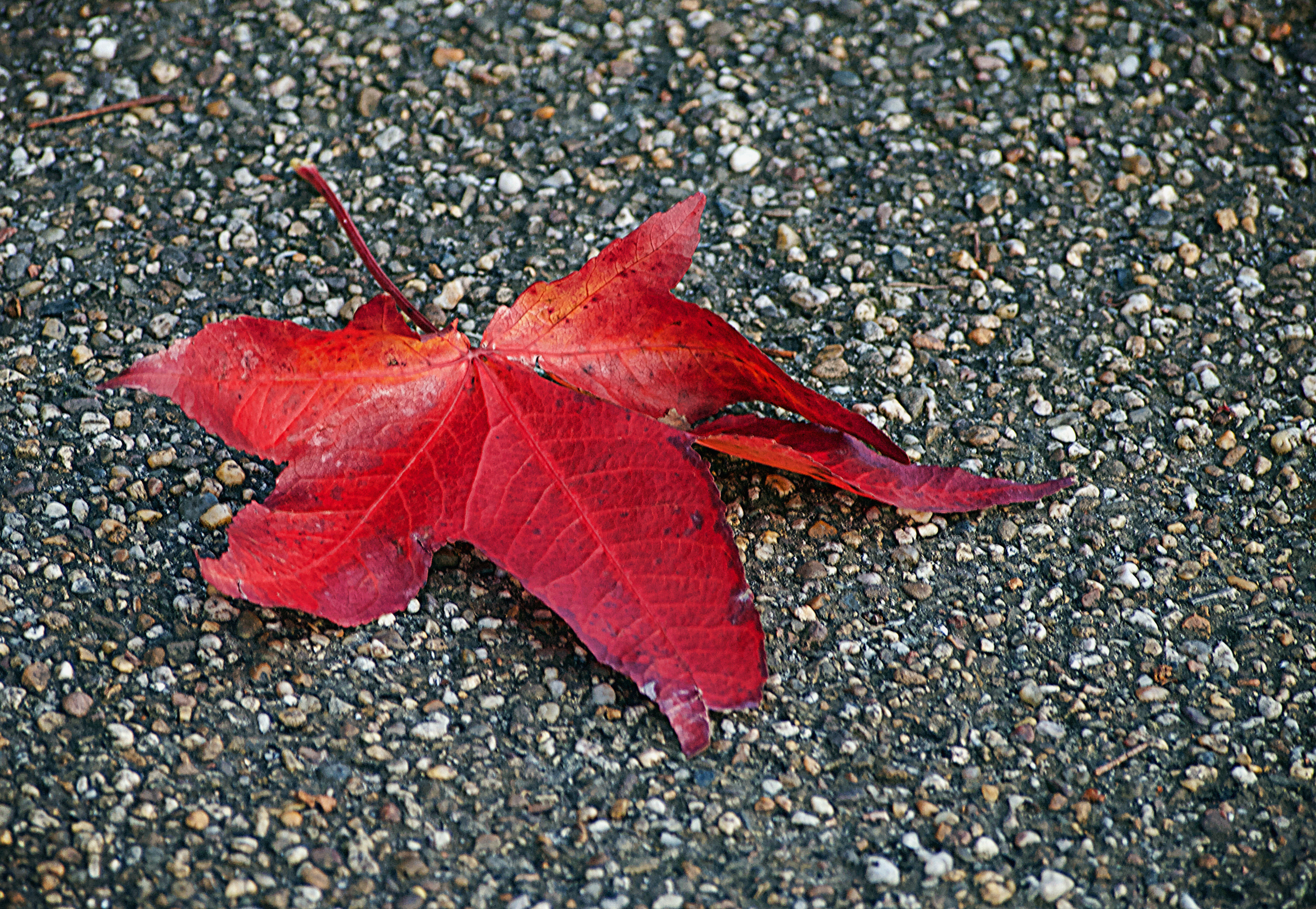Red leaf on the floor