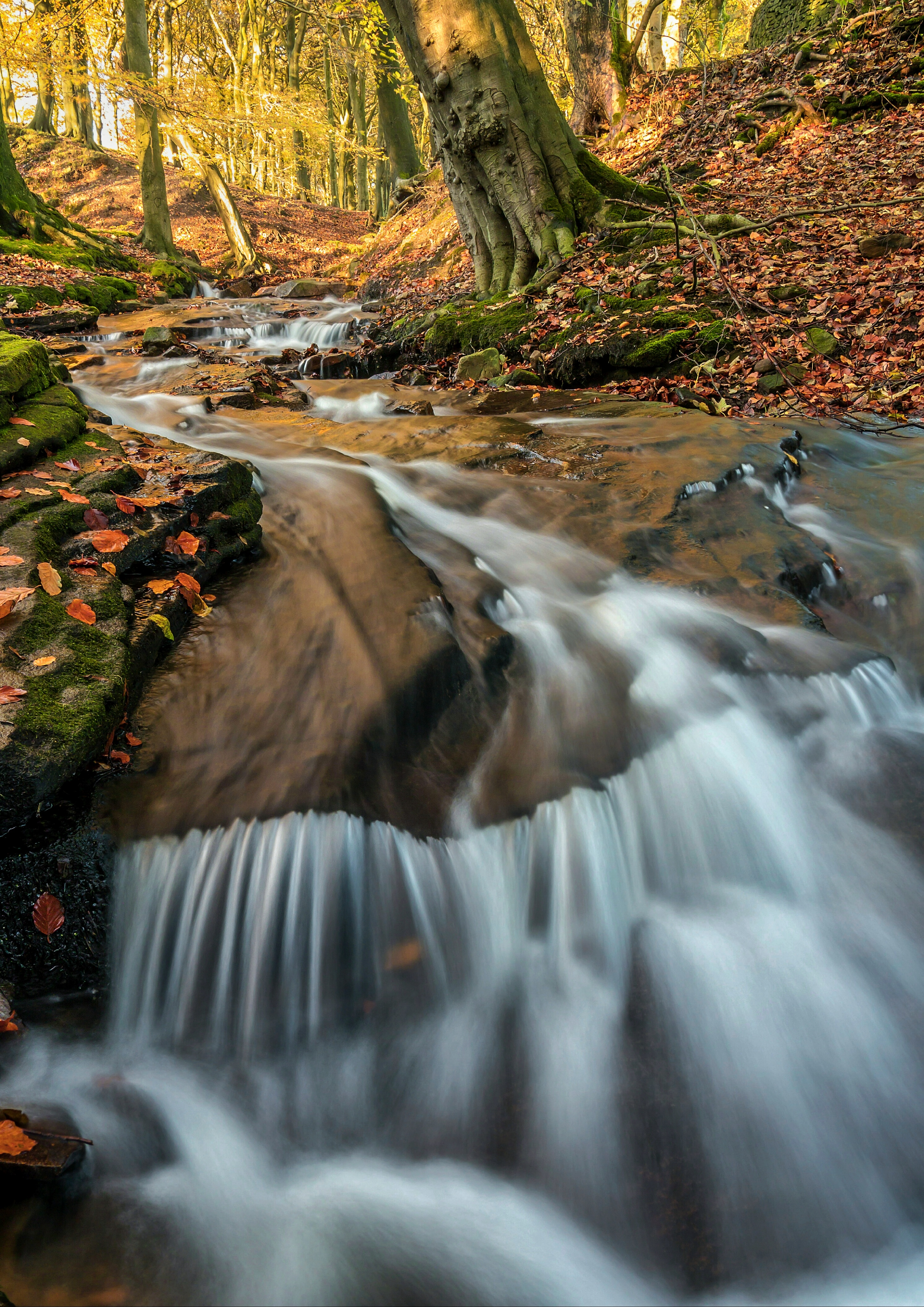 Woodland waterfall - 1