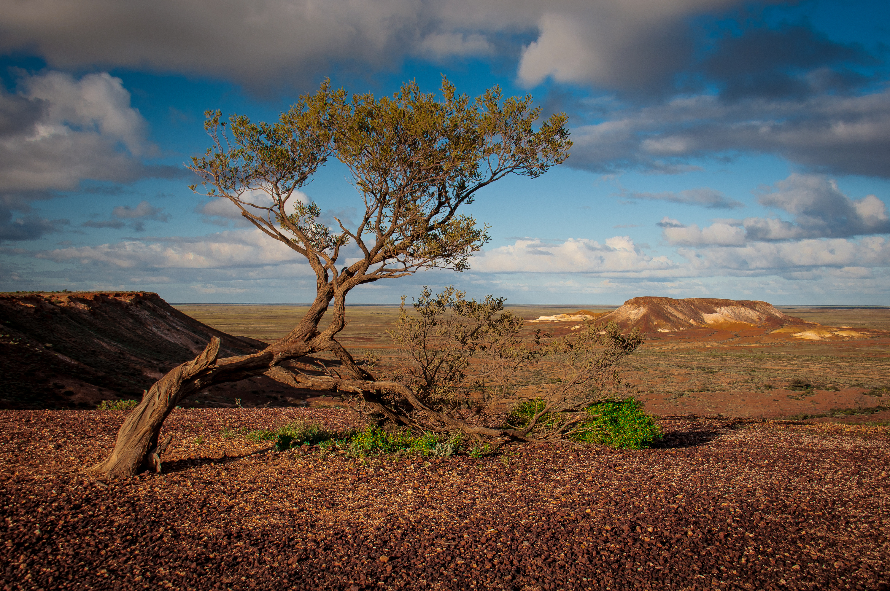 Lone tree in the painted desert Outback Australia