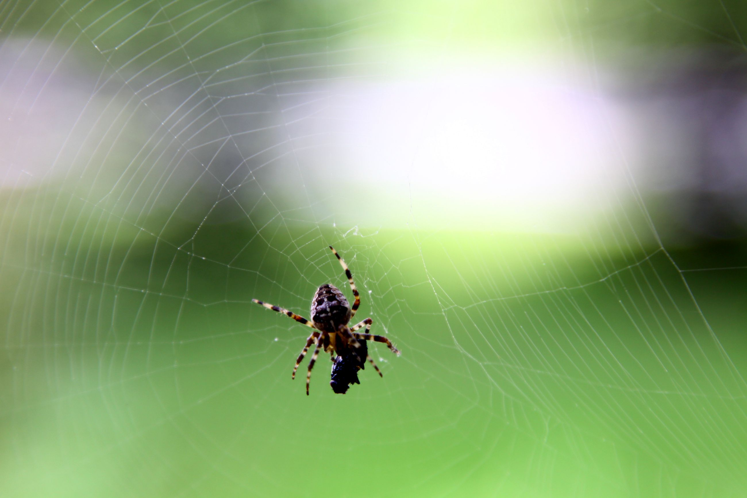 spider and fly 1103 4mp.jpg