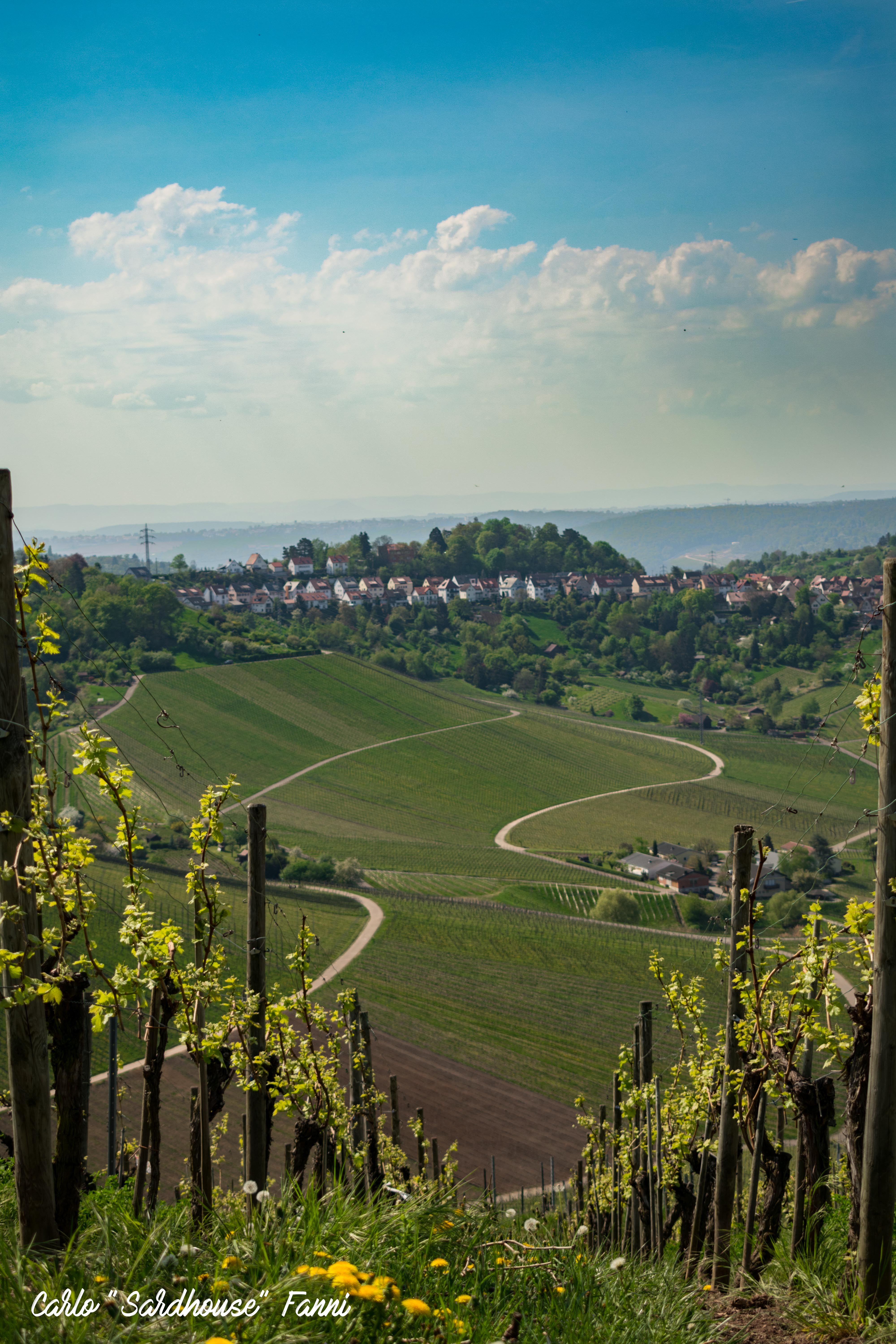 Panorama from a vineyard