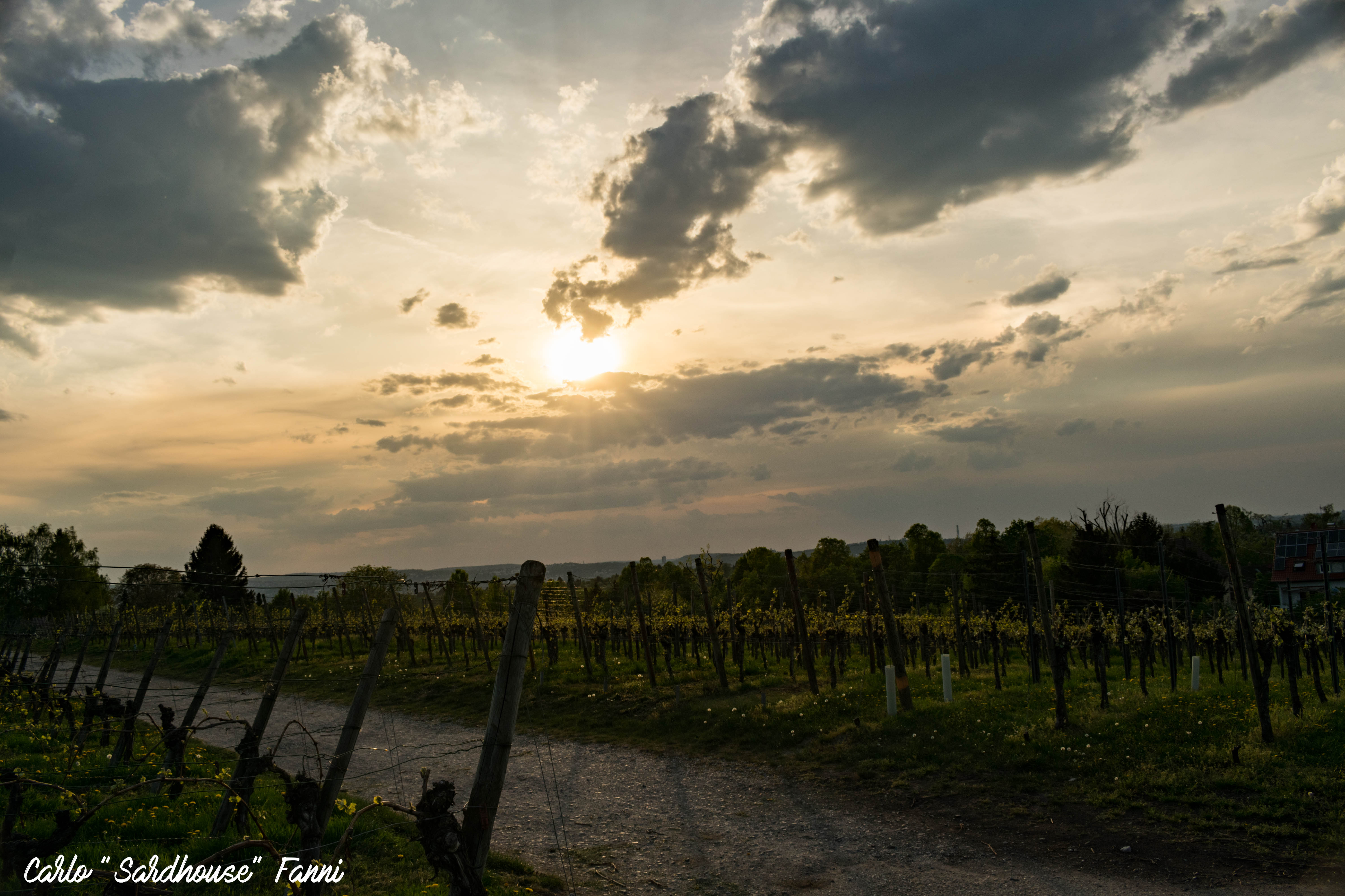 Sunset in Fellbach vineyard #2