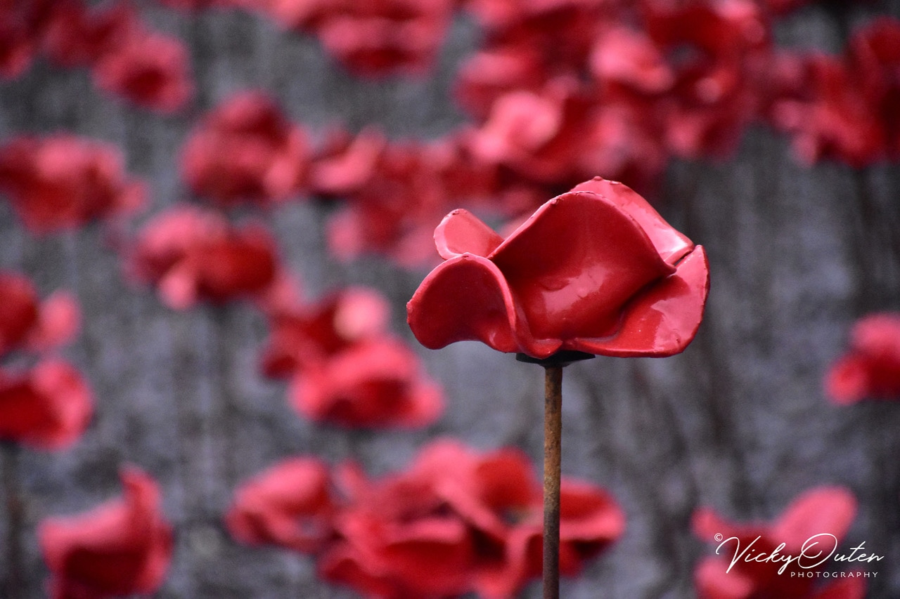 We will remember them! Lest we forget.