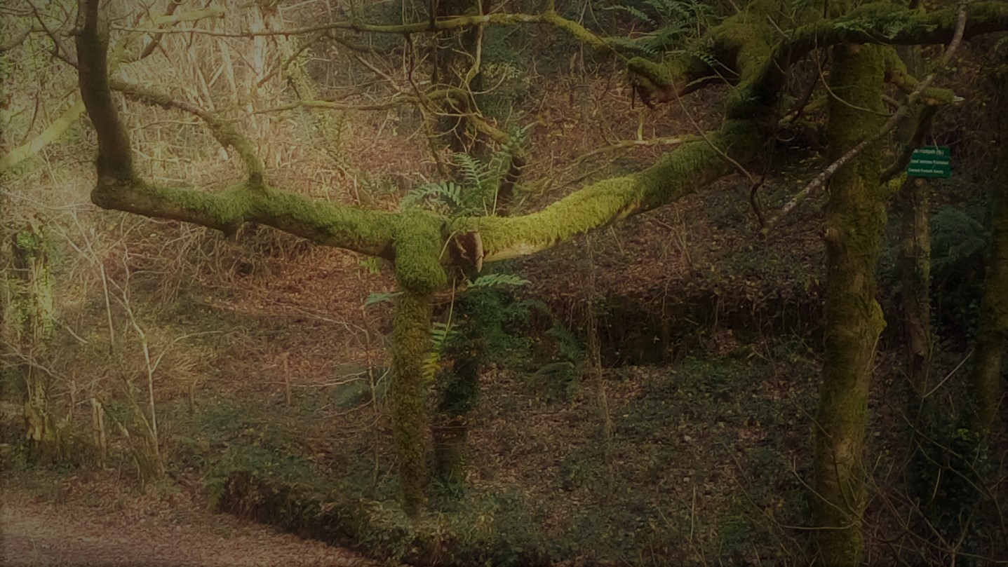 The mossy tree's tail.