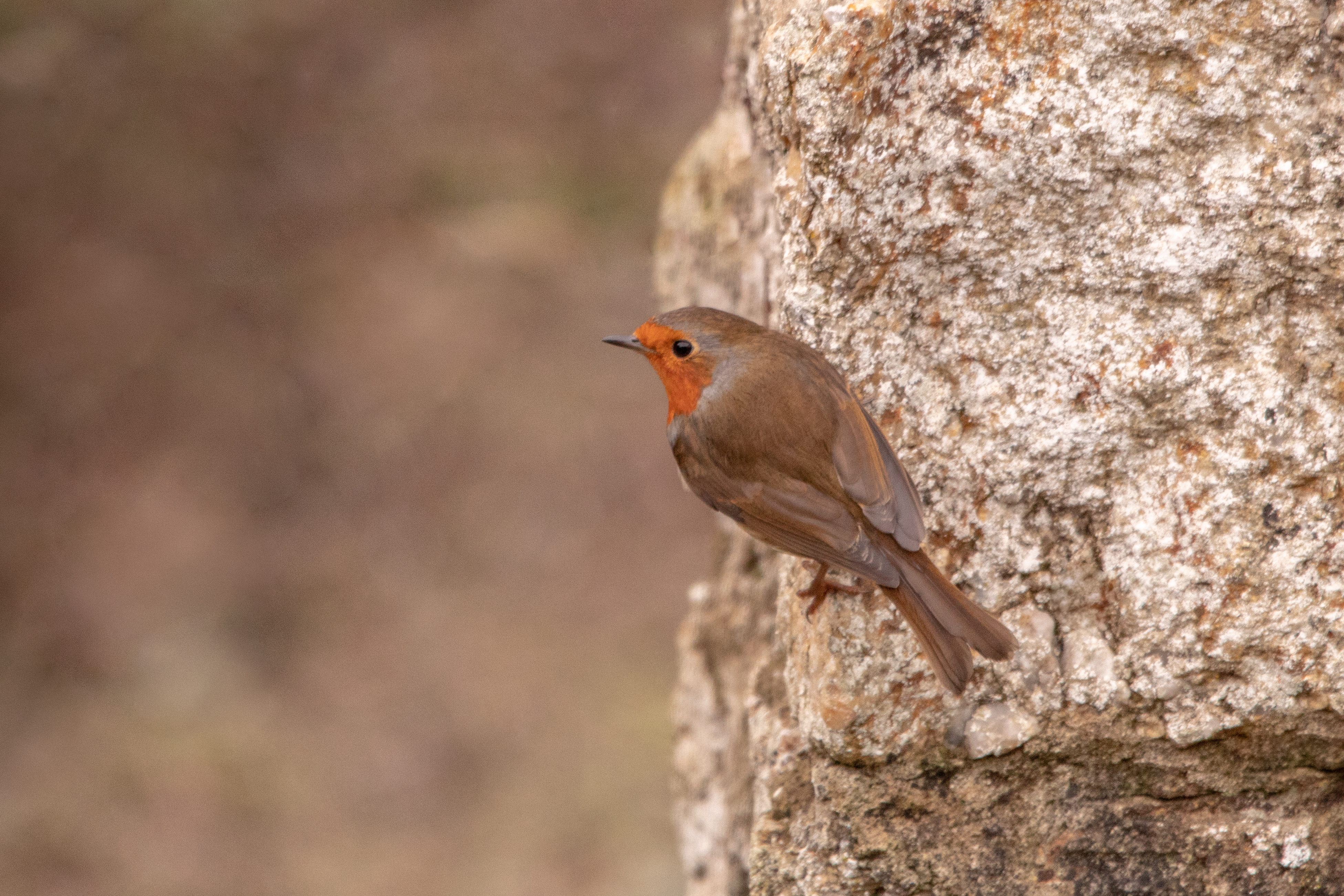 Robin Hanging on to the Side of a Wall