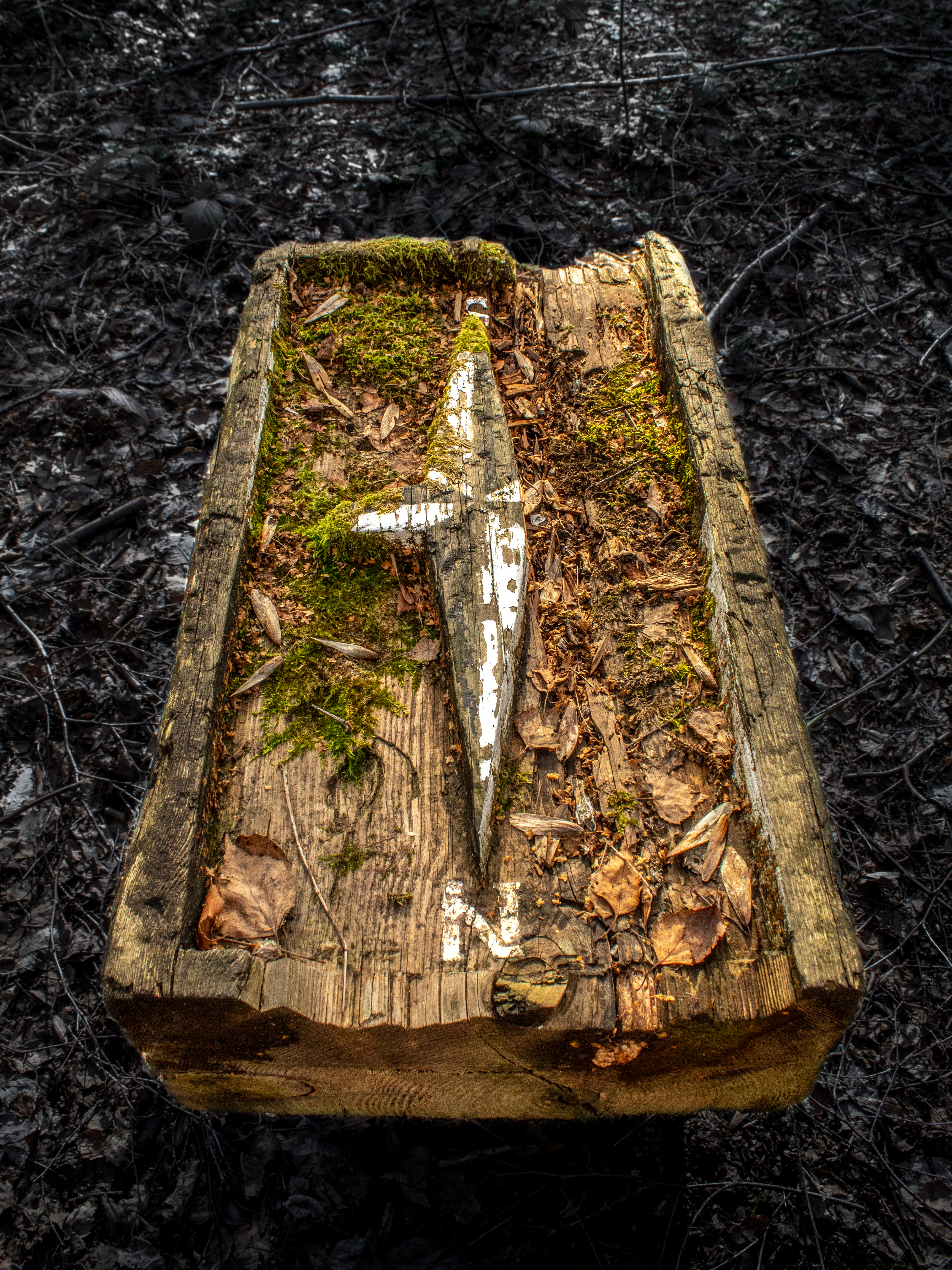 Sunlight on an Old Wooden Compass in the Forest