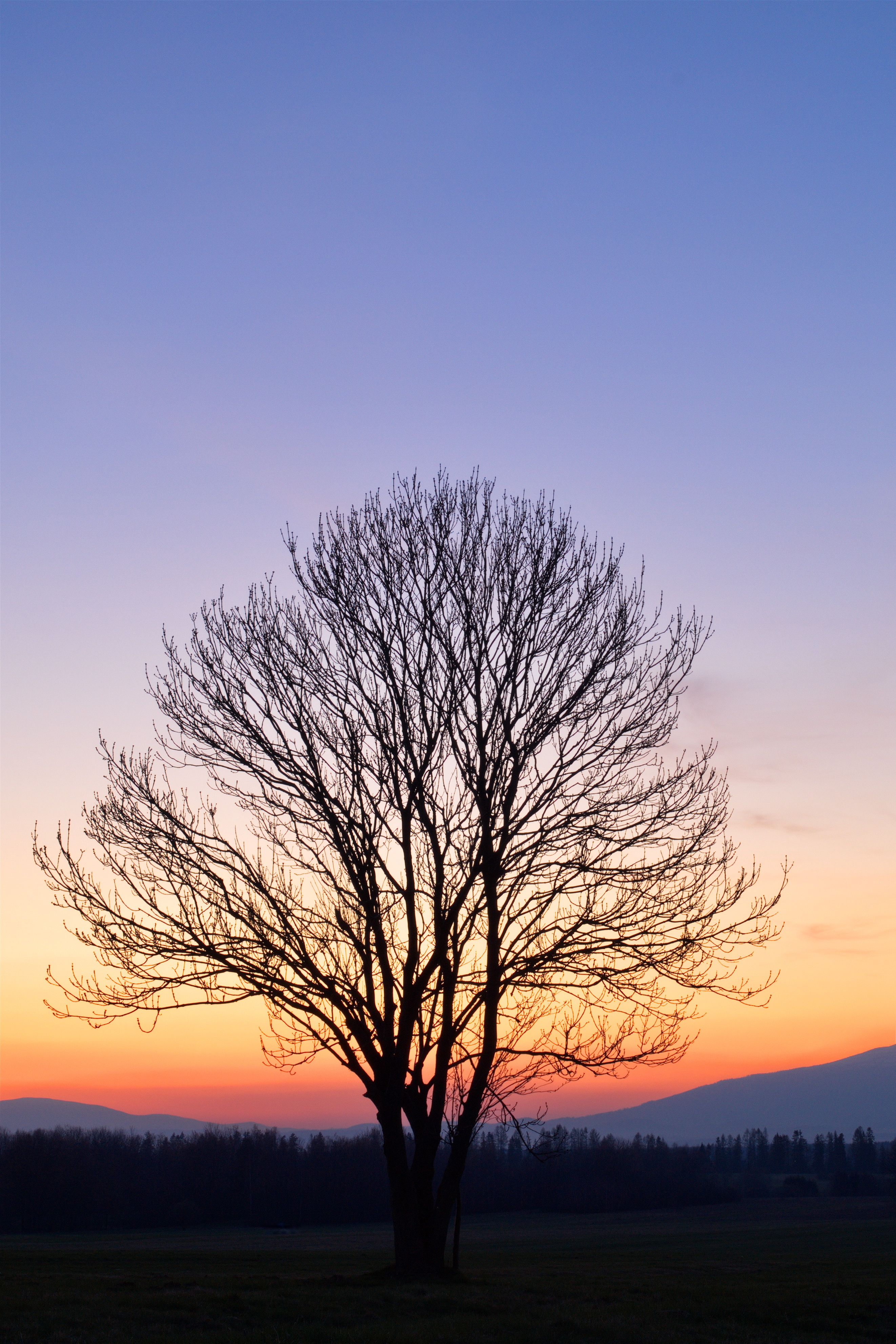 Lonely tree after sunset