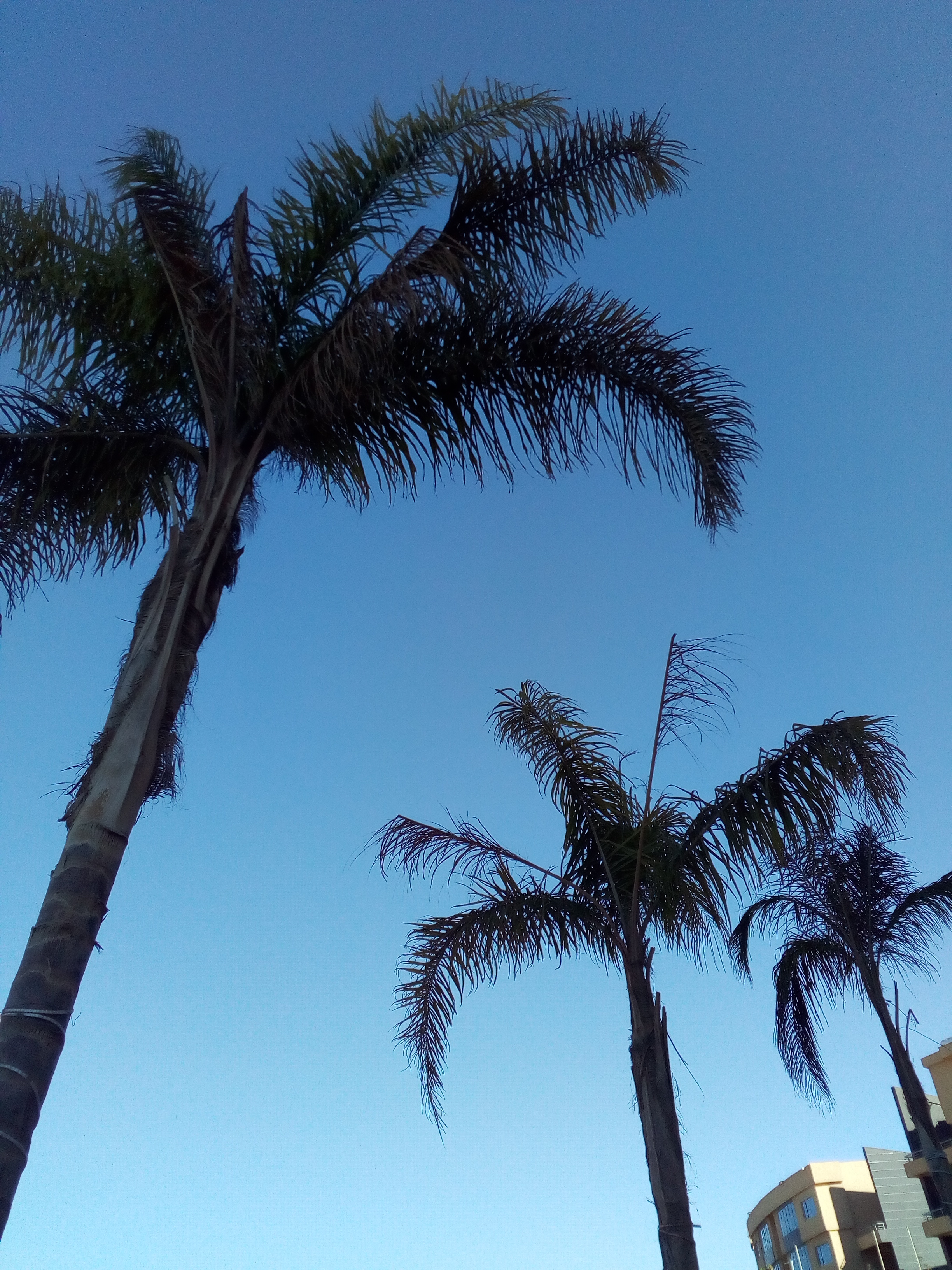 Palm trees reaching the sky