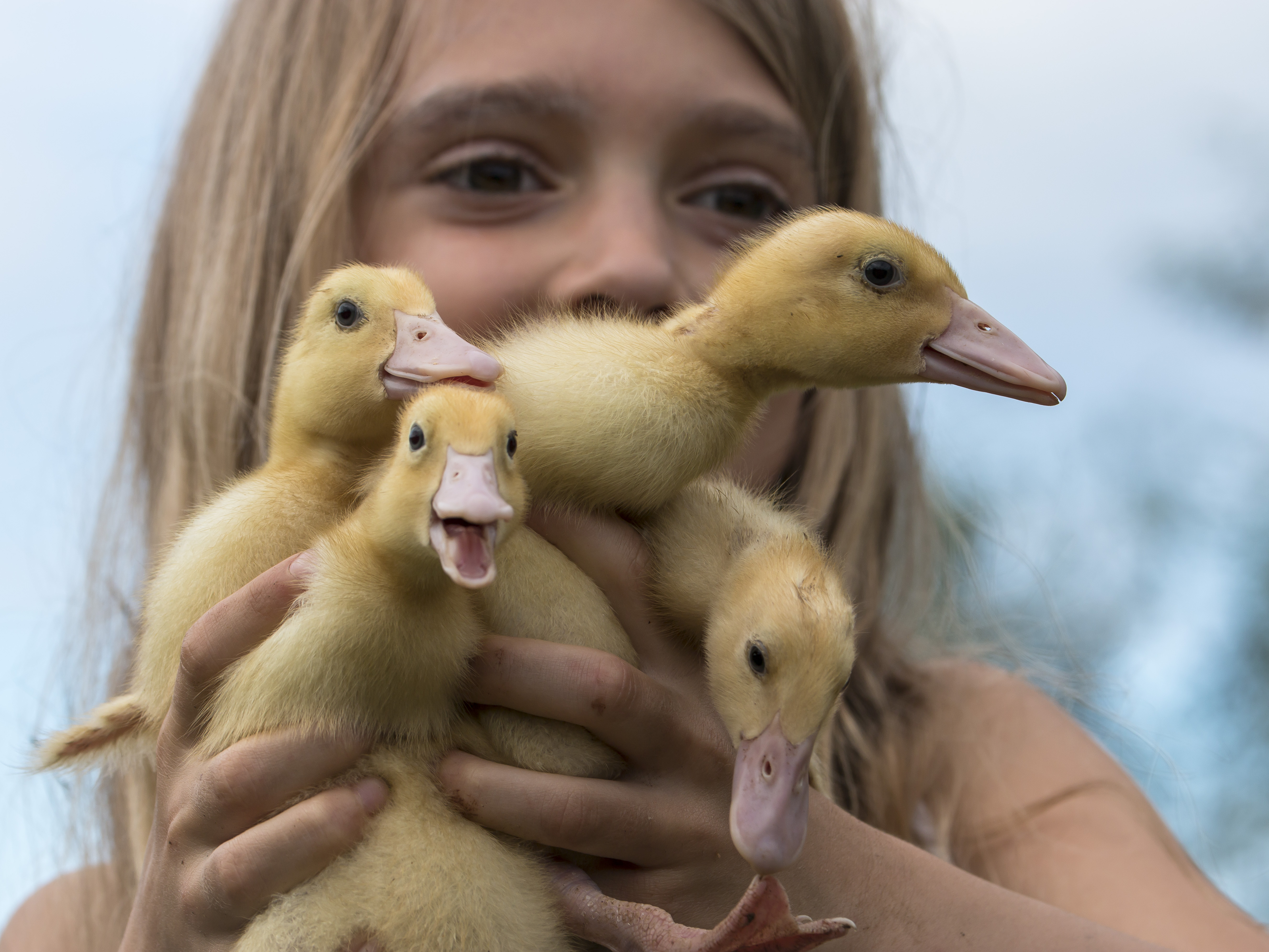 Girl with ducklings 9602