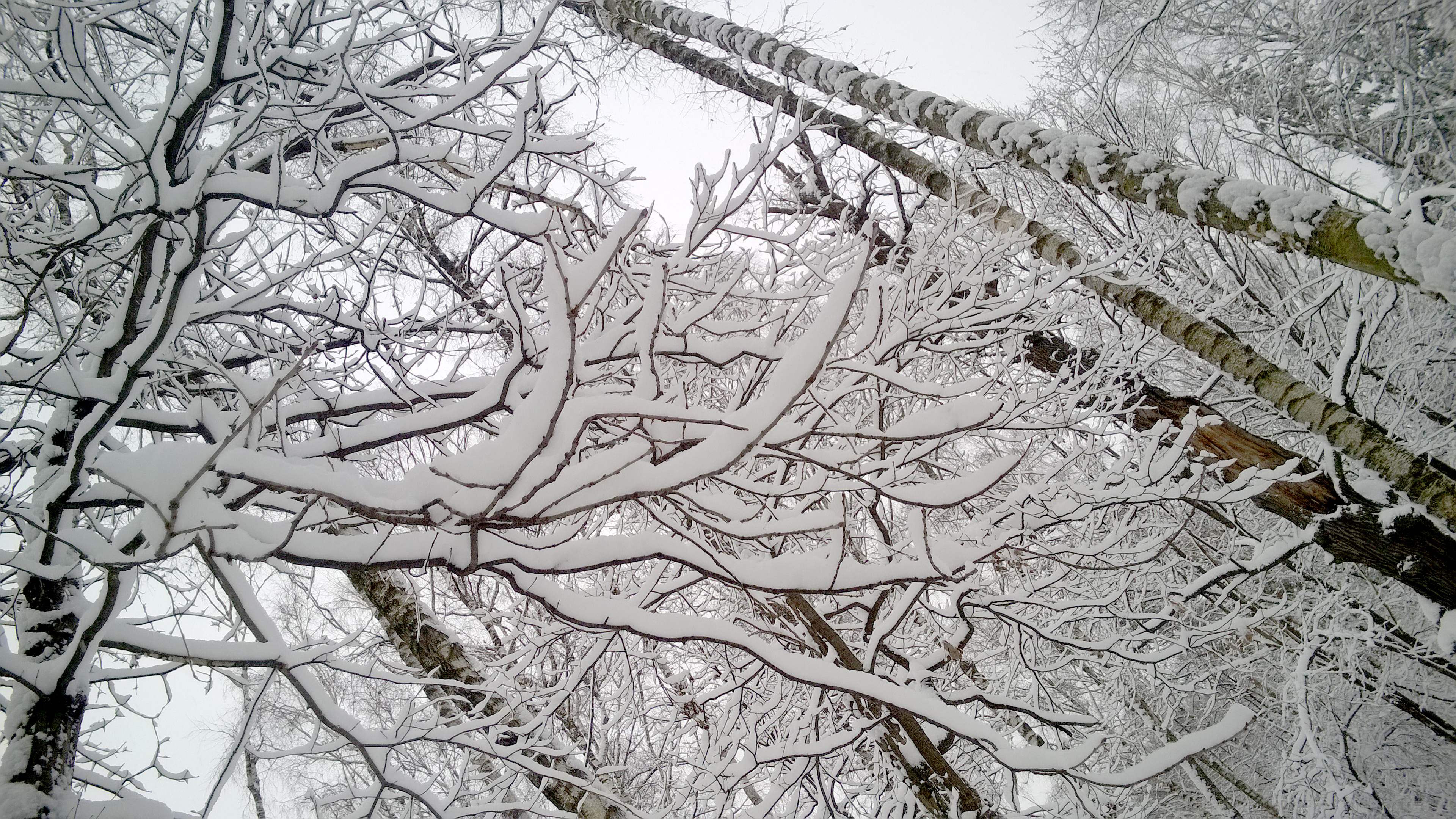Winter park, tree branches covered with snow