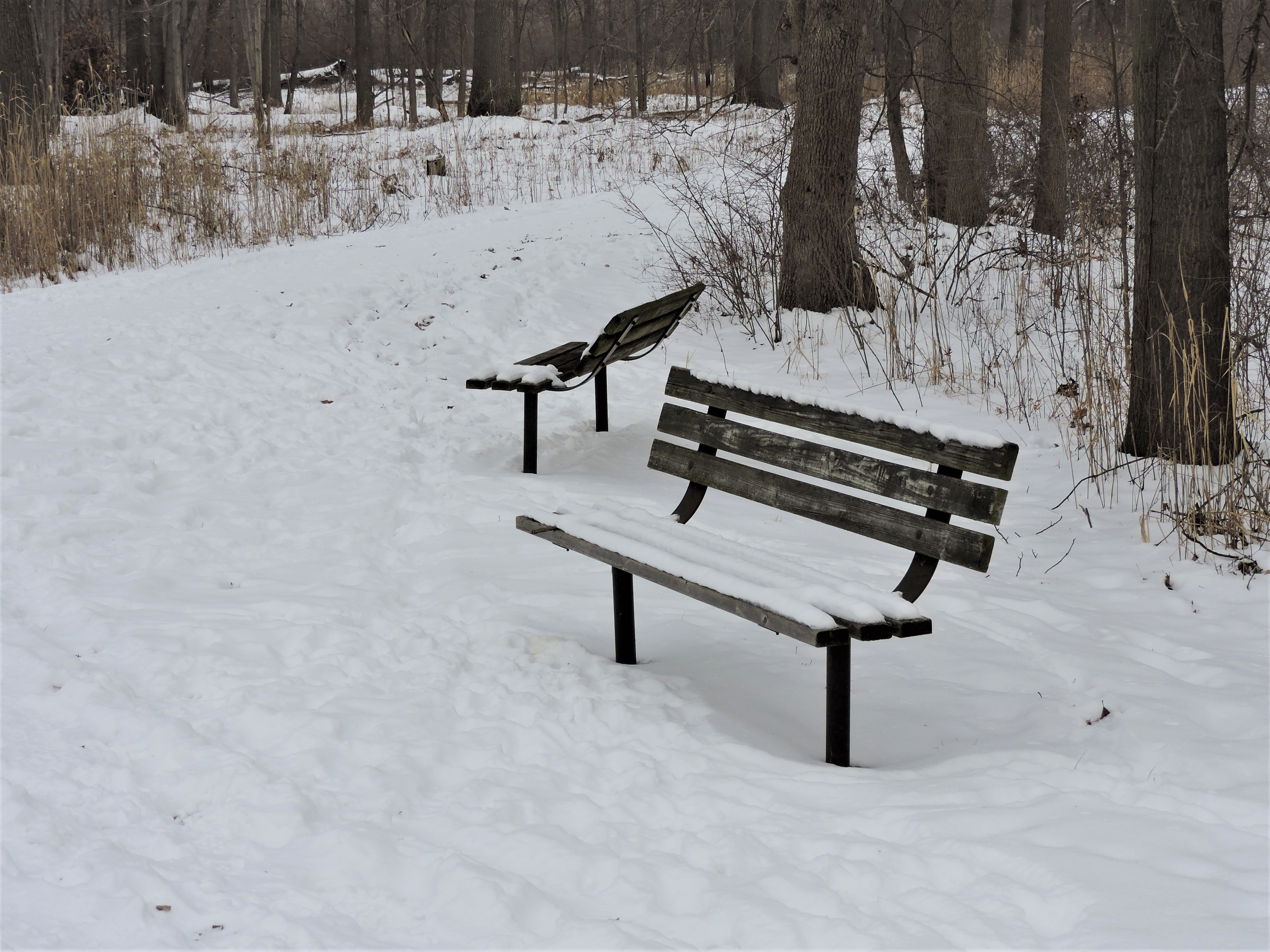 Snow Covered Park Benches.jpg