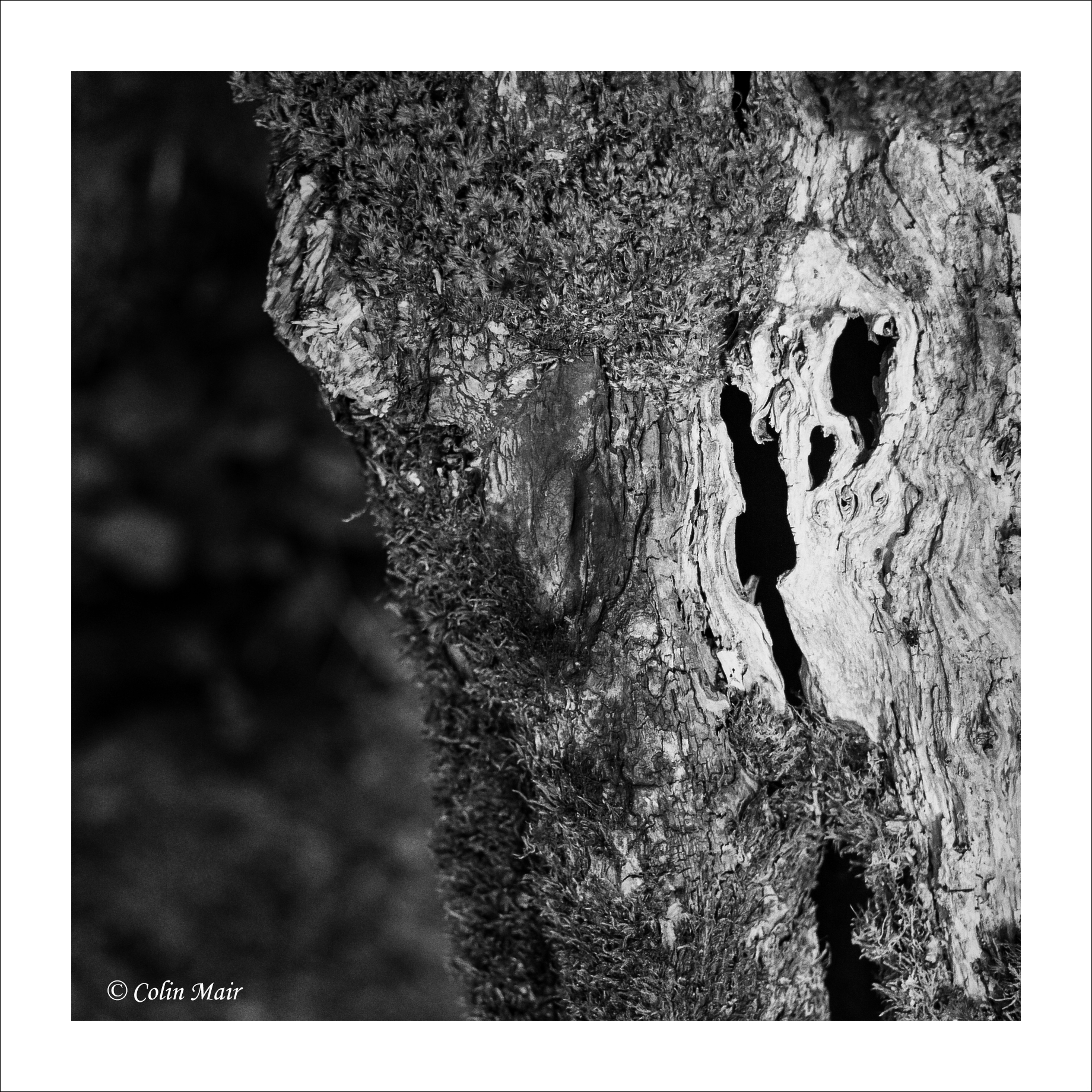 Decay - 2018-05-25th, _8A_01130, Helios 44-2, 58mm, f11, 1-60th,  Loch Doon, tree bark