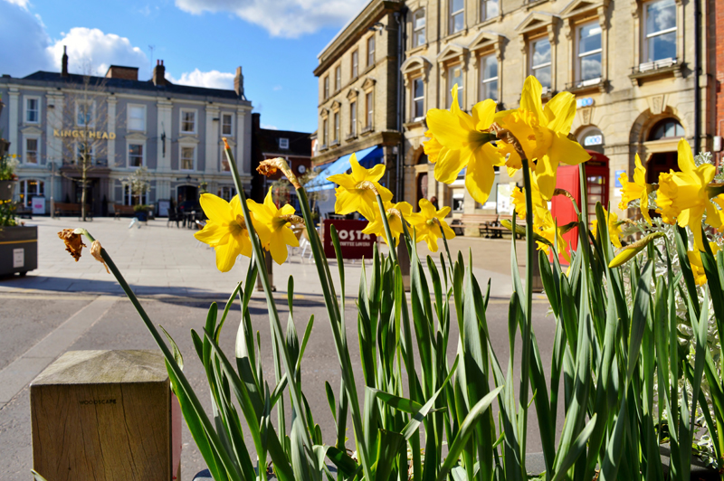 Daffodils overlooking Wimborne Square