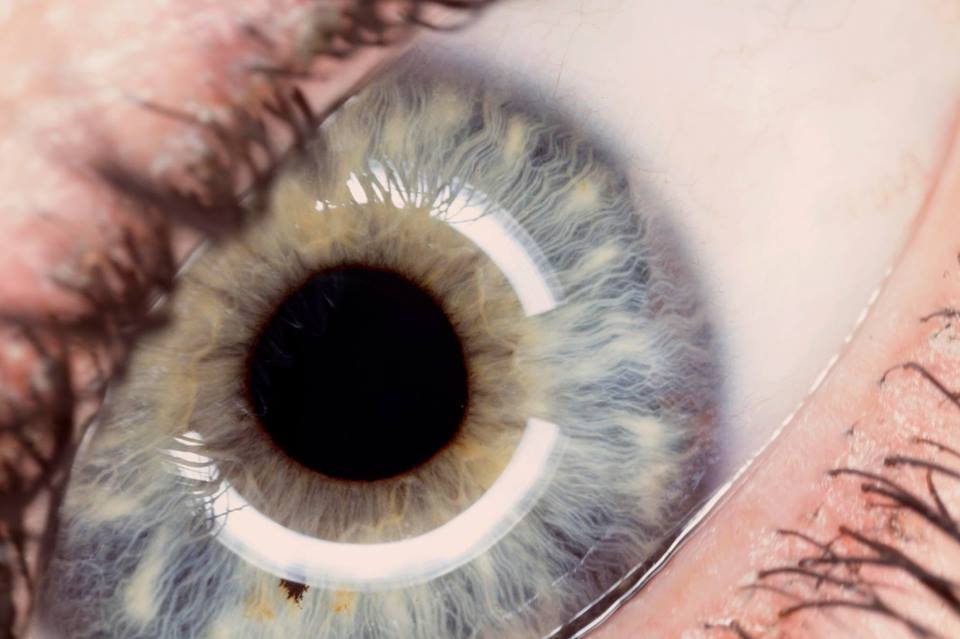 Human eye close up.jpg