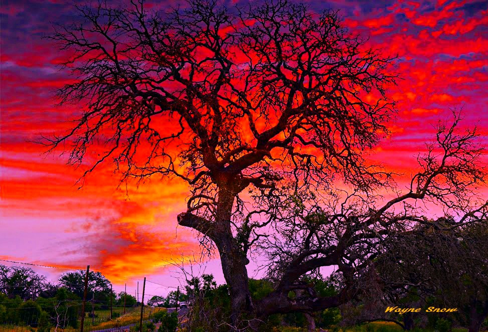 black tree red sky.jpg