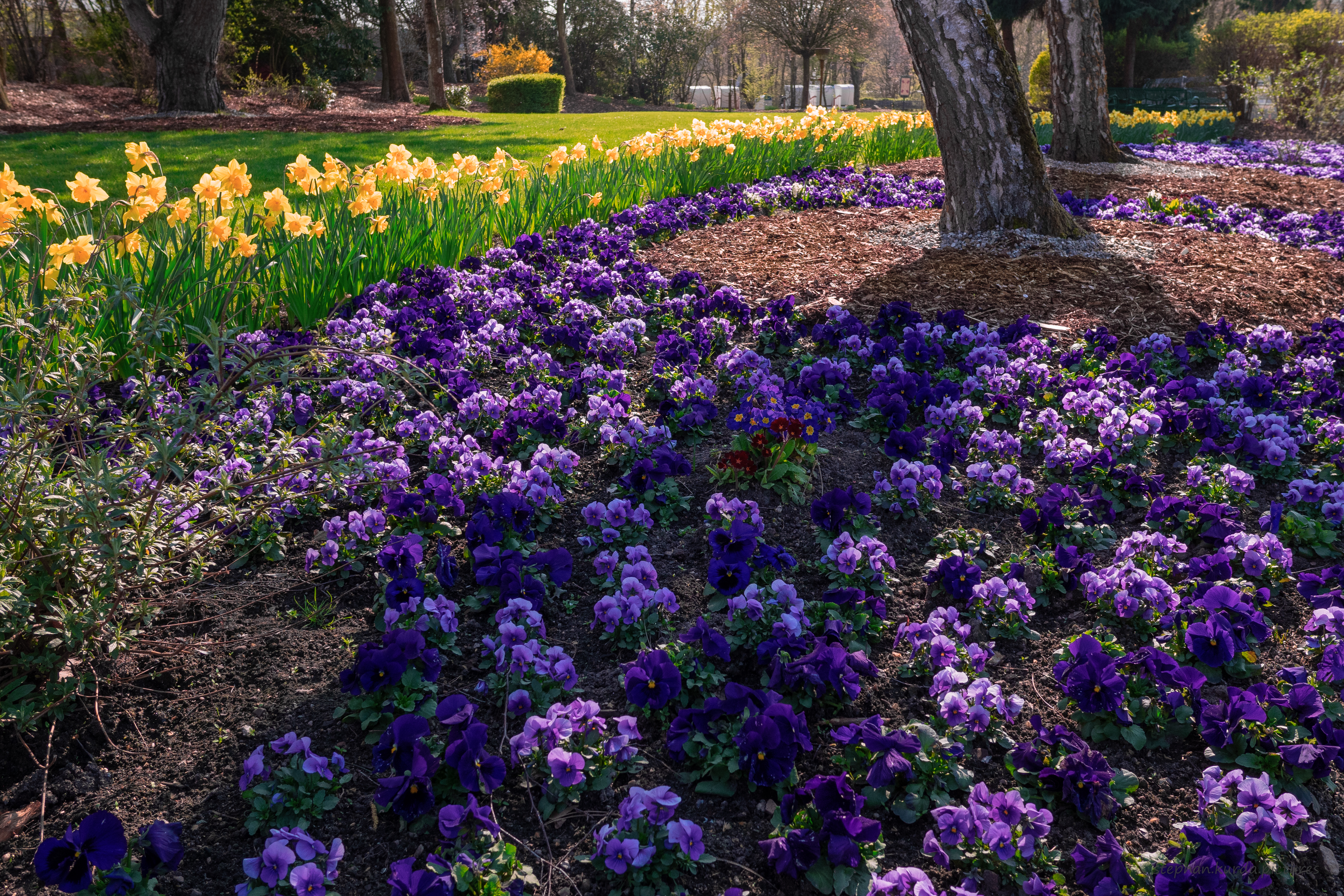 Spring flowers in a parc
