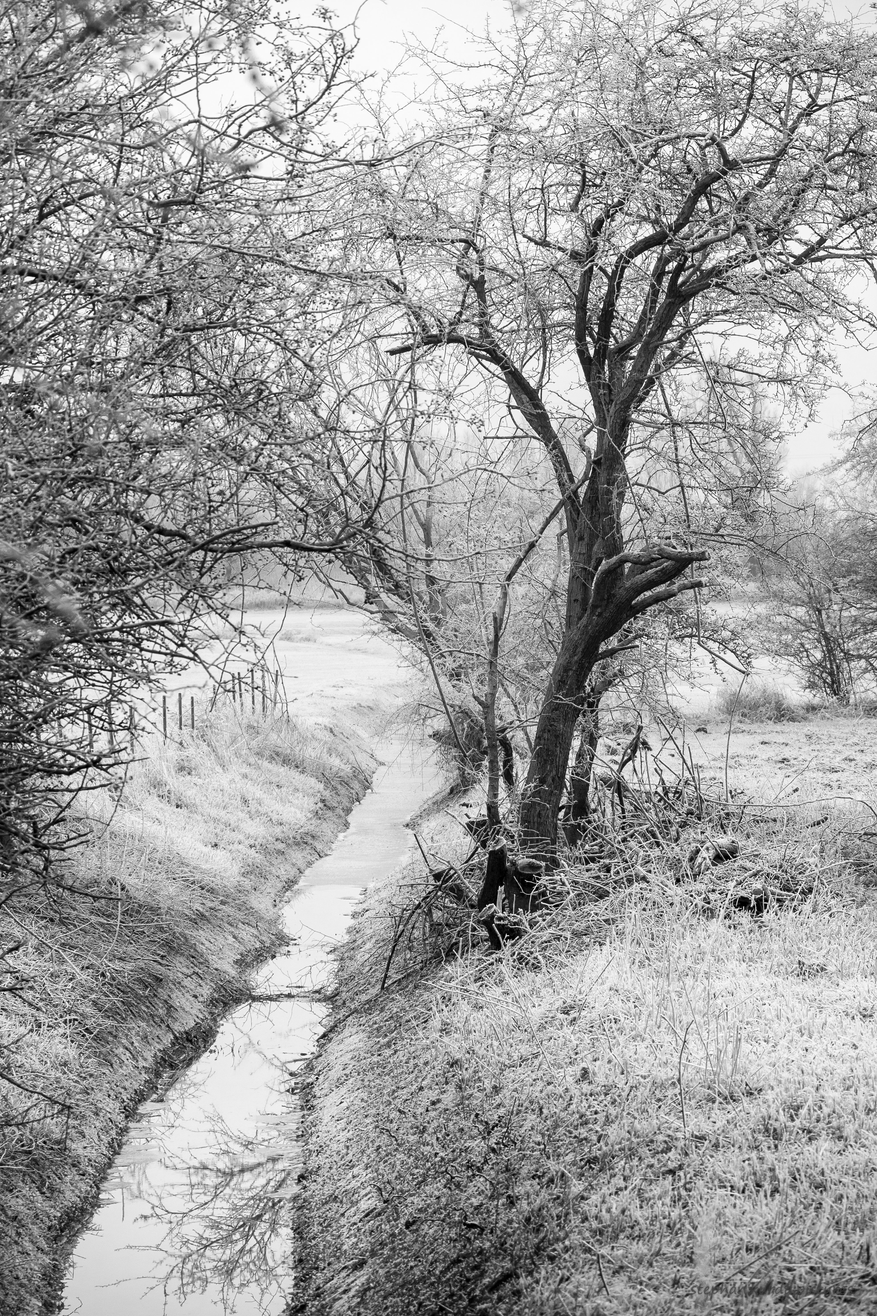 Winter scene in b/w