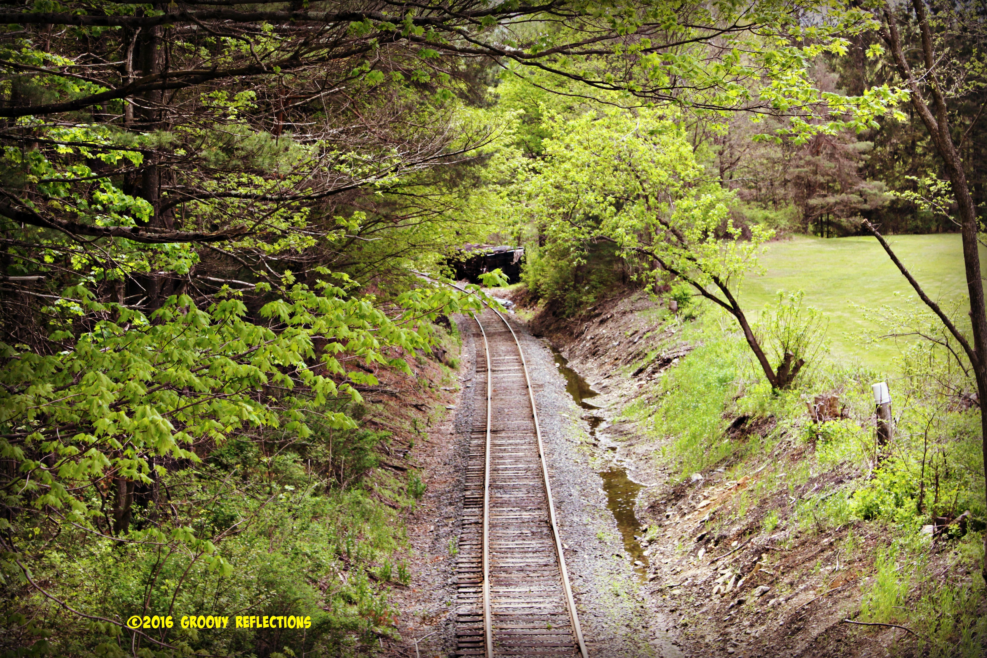 Railroad Tracks in Springtime