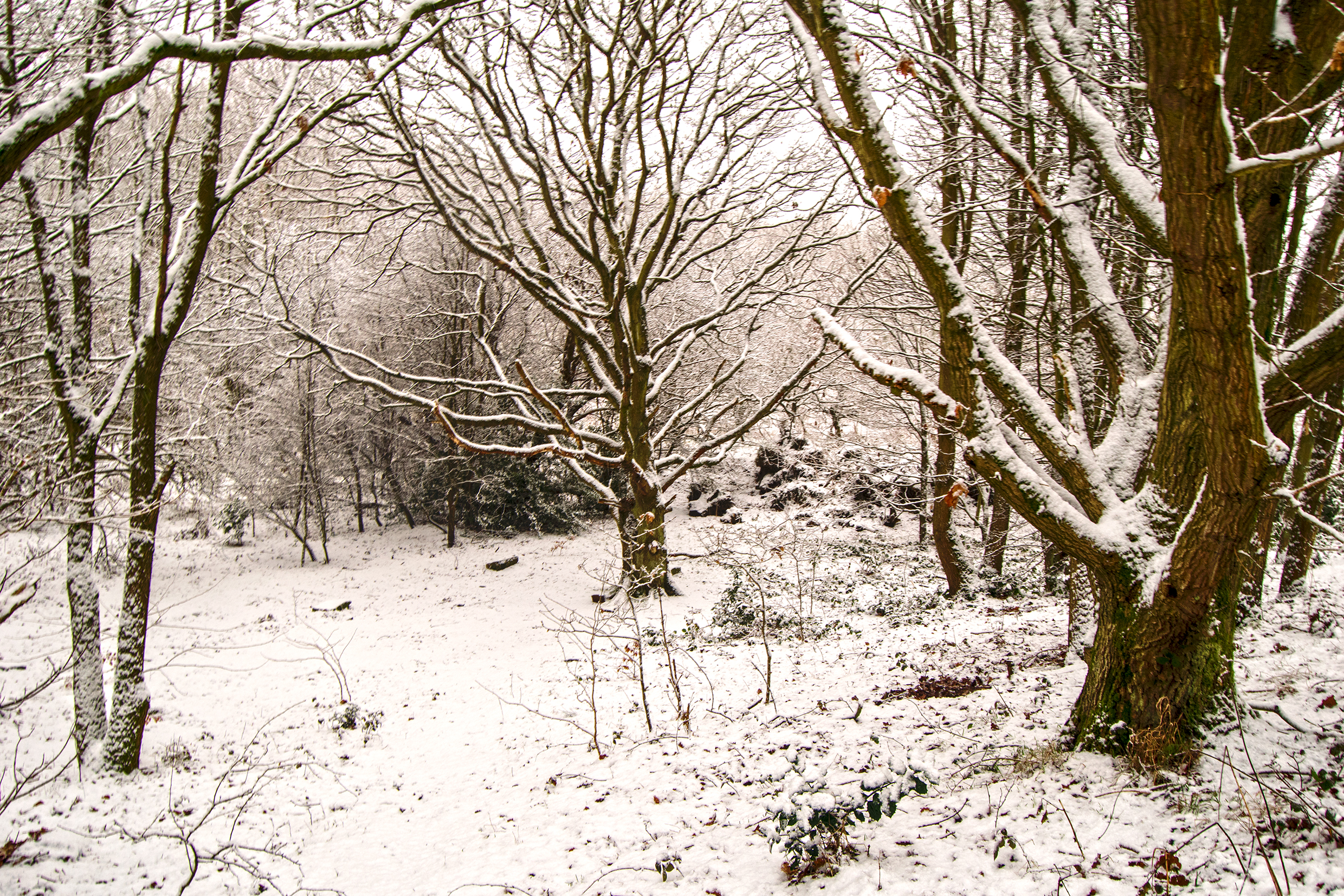 Snowy Woodland on the Canal.