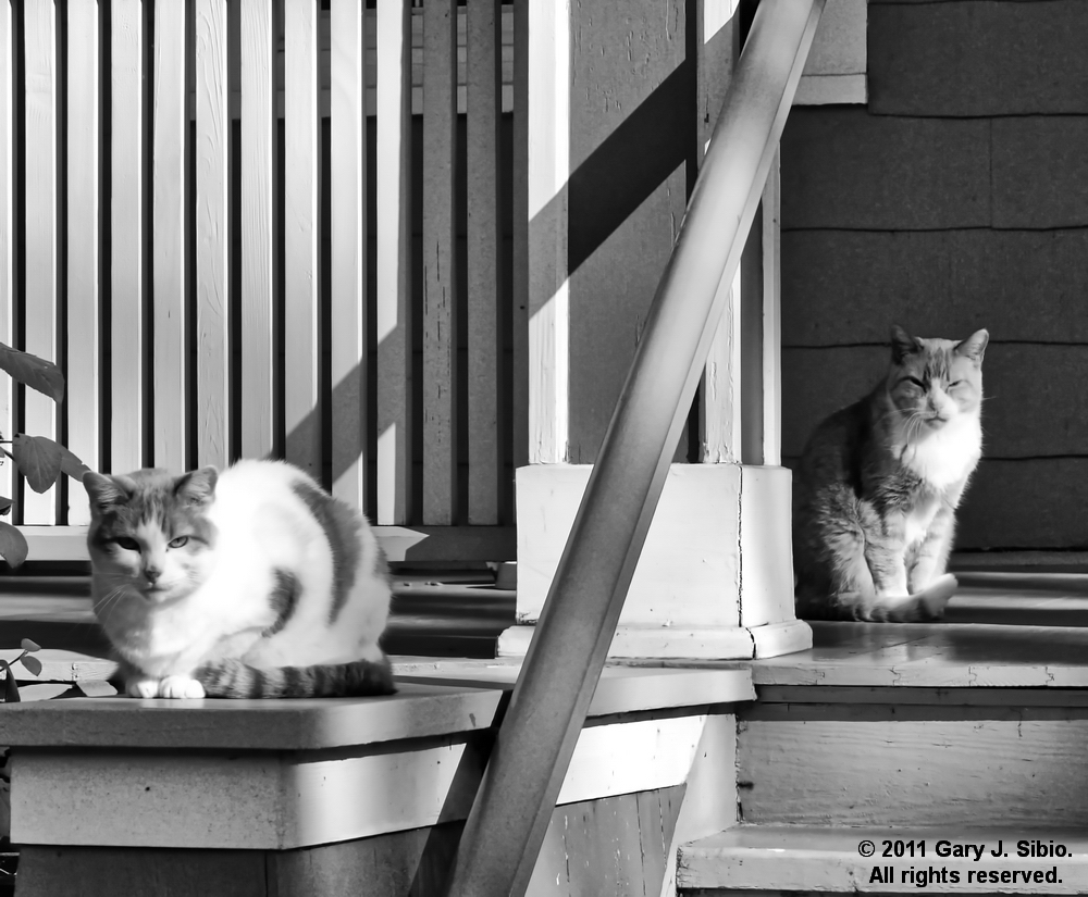 Two Cats on Someone's Porch in Chicago - Black & White Version (2011-11-05 14-20-09_01)