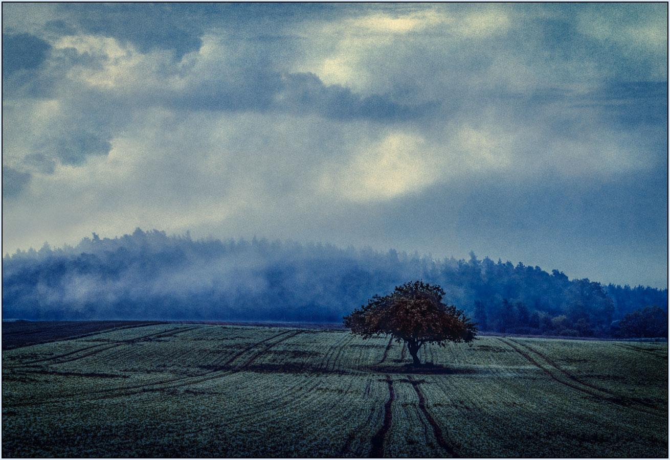 Solitary Tree, very early morning