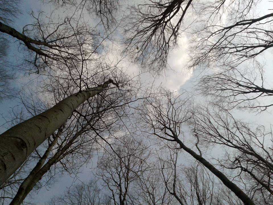 Look at the sky, trees