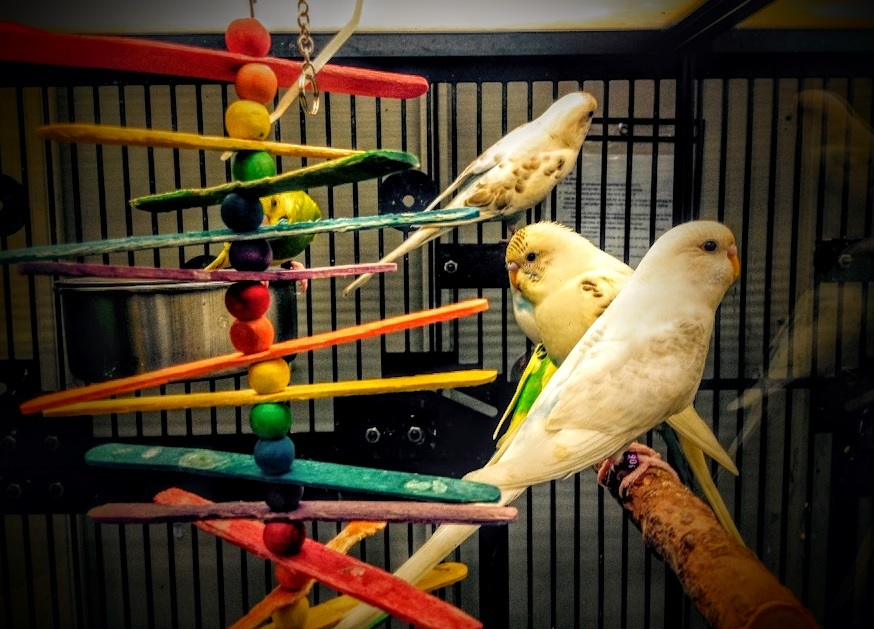Birds at a Pet Store - Parrot (Original Photography by Mike Pugh)