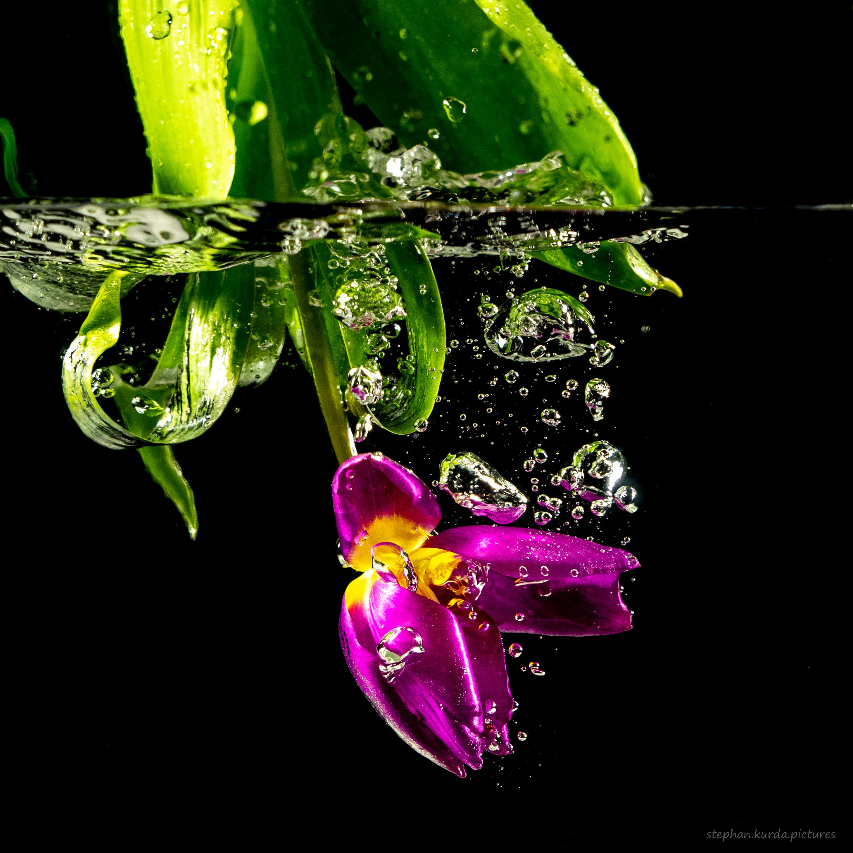 Flower splash