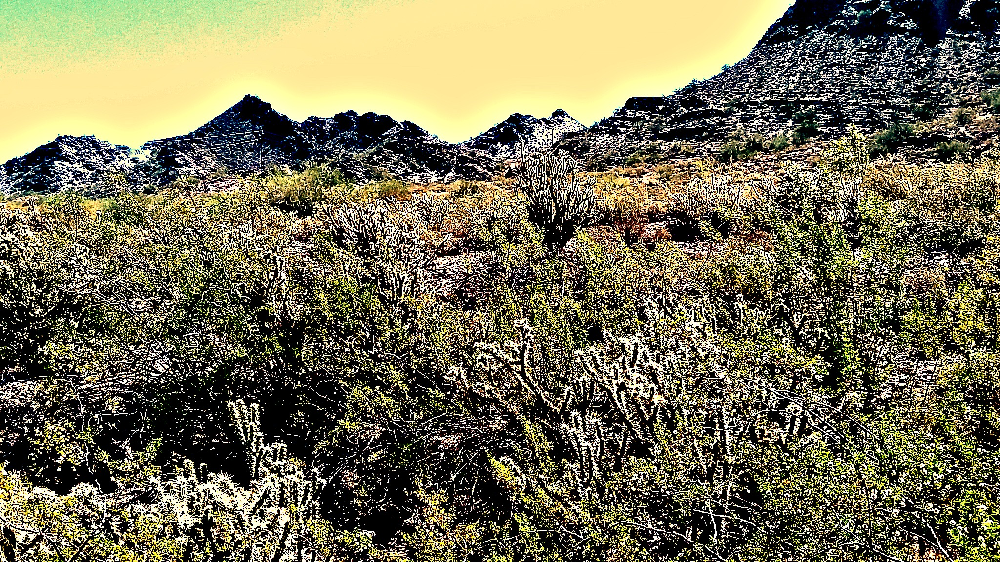 The Sonoran Desert of Arizona