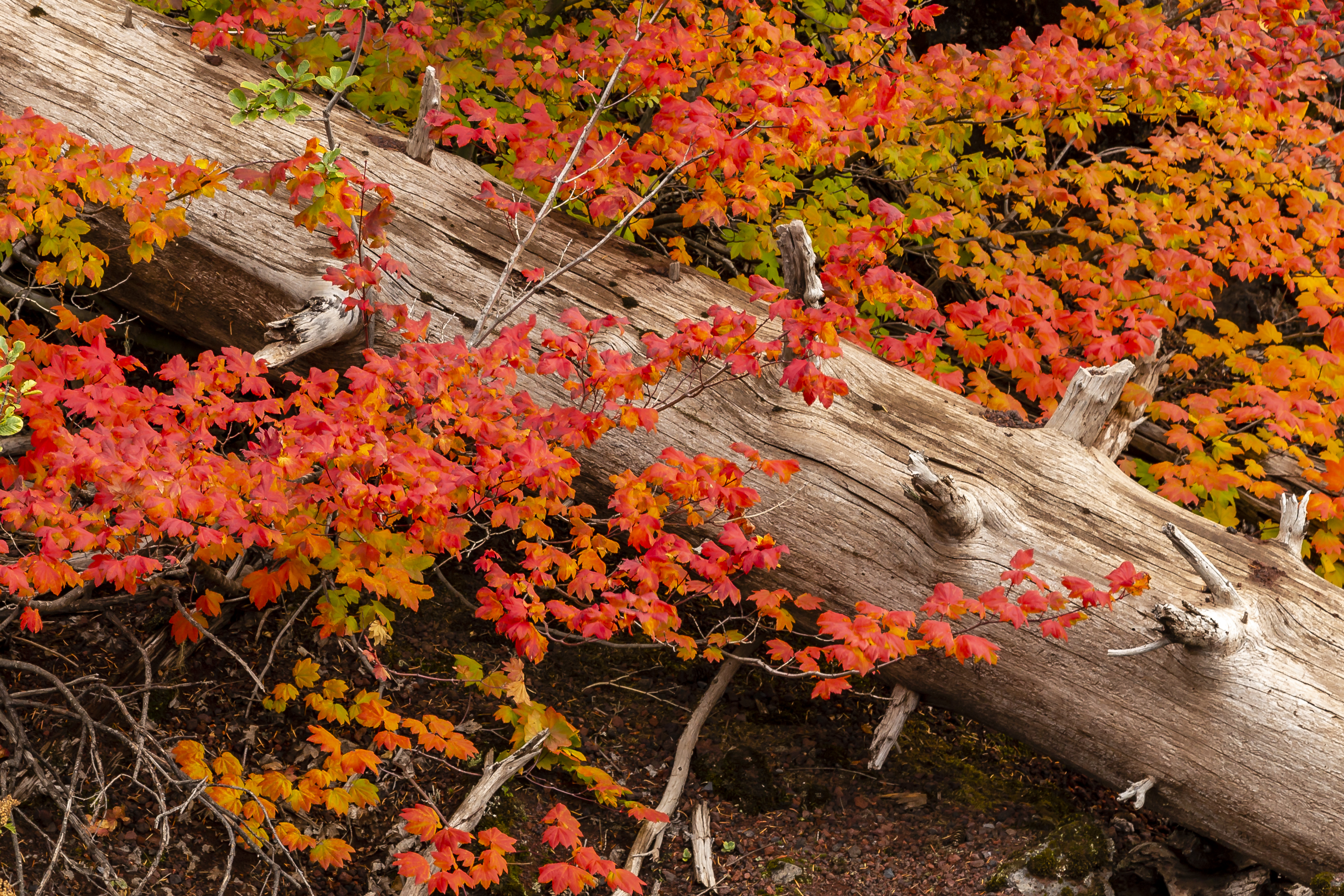 Cascade Mountain Fall color!!