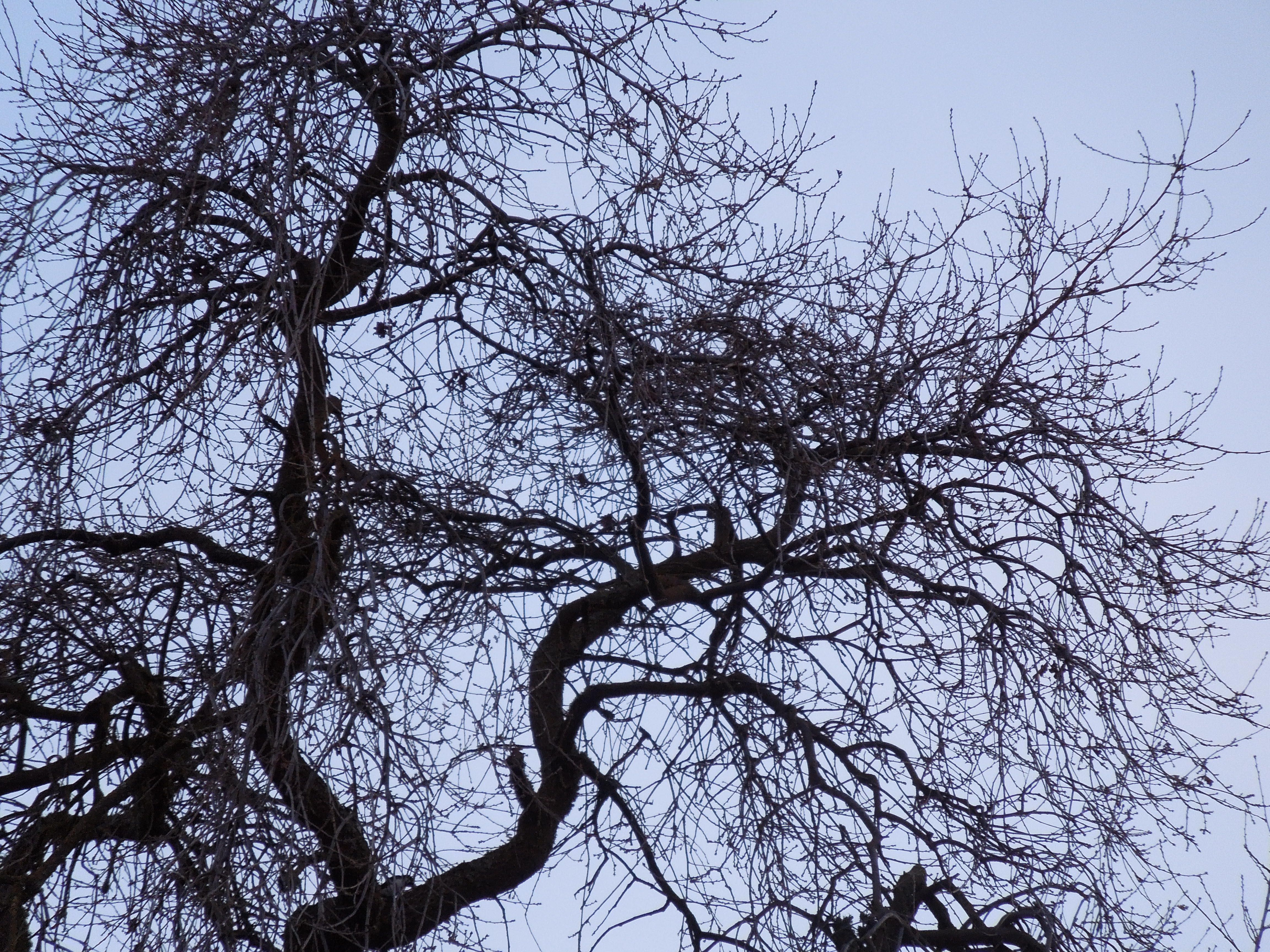 Bare Tree Branches in Winter Sky