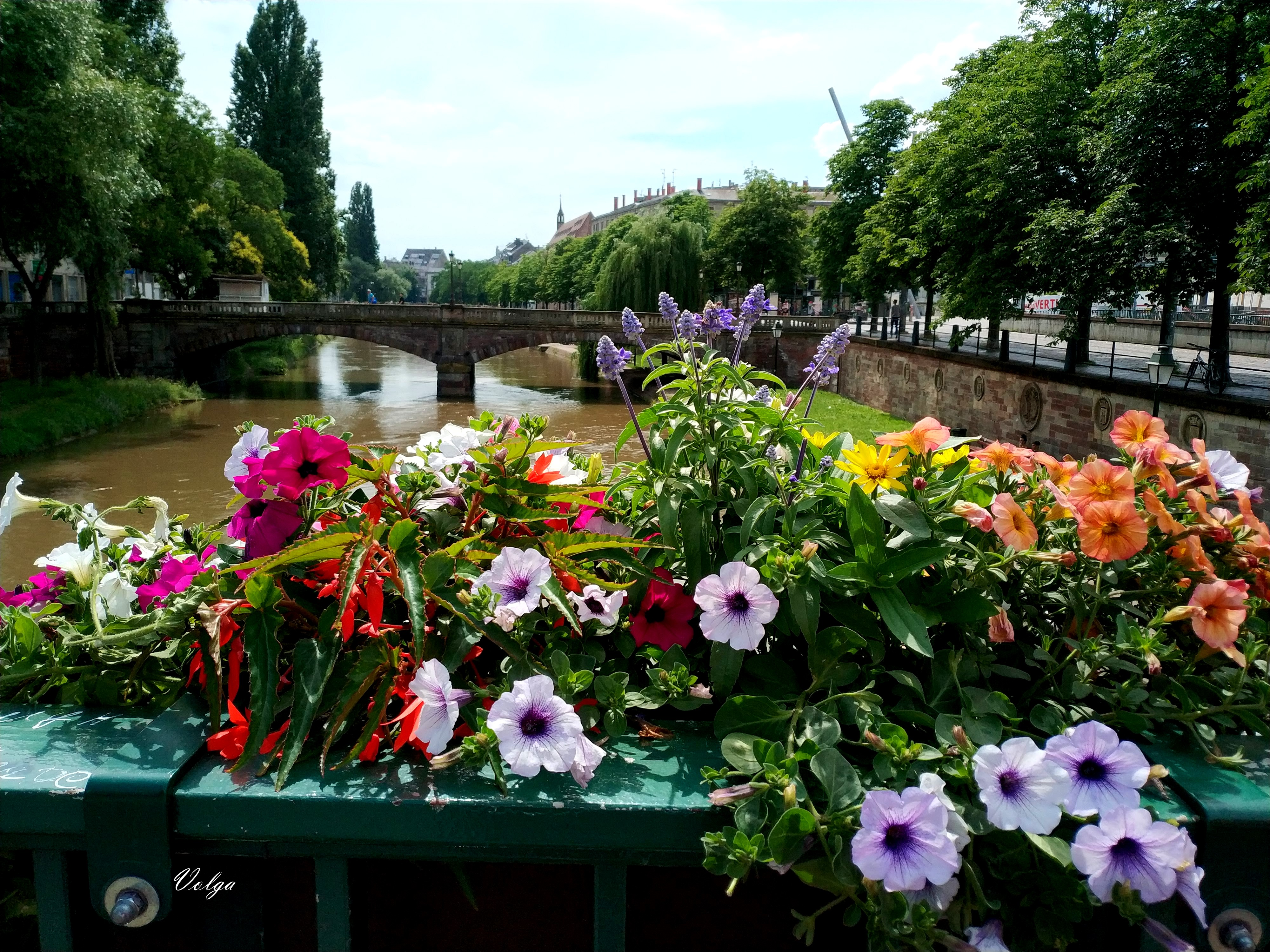 Flowers and river