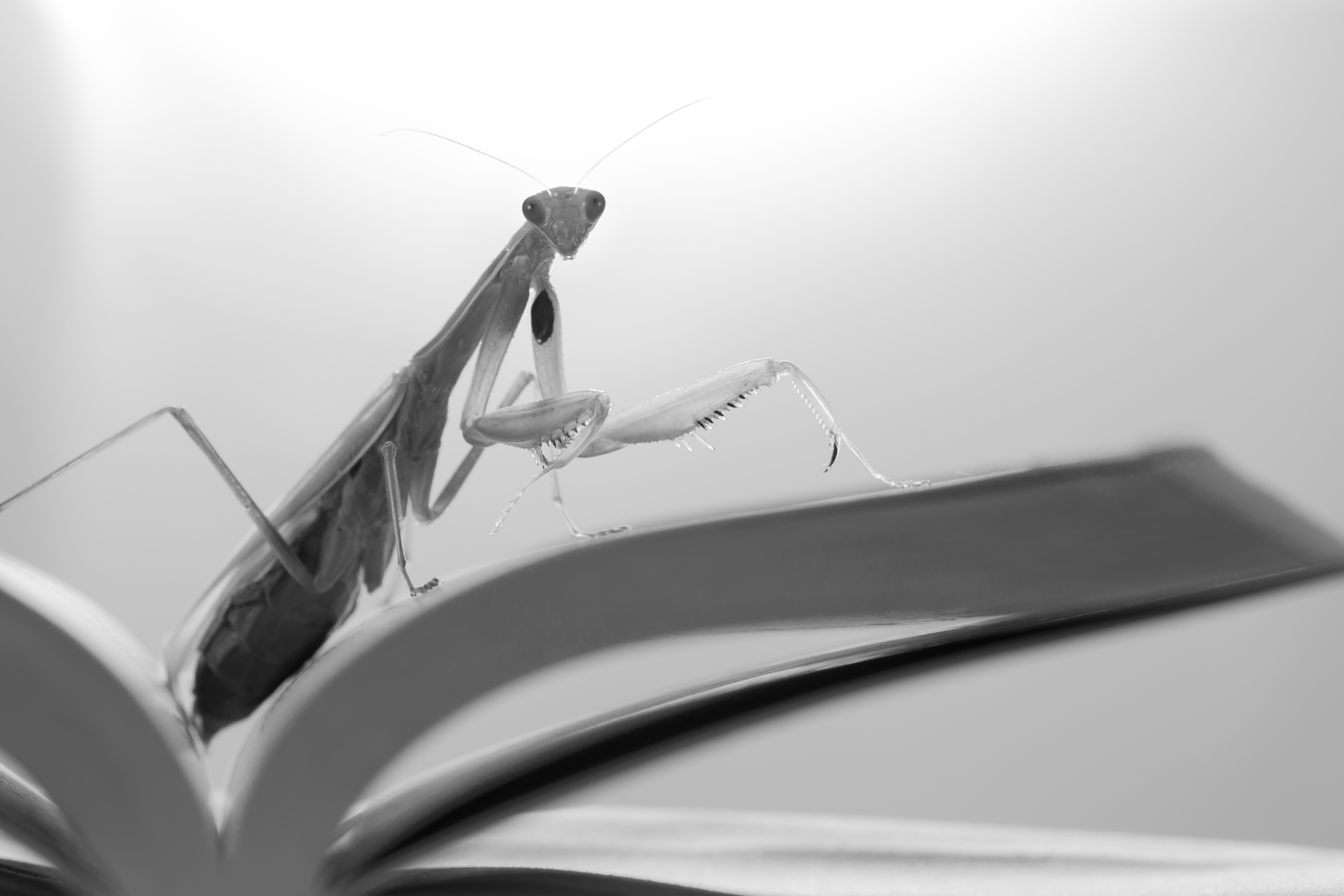 Praying mantis in the library