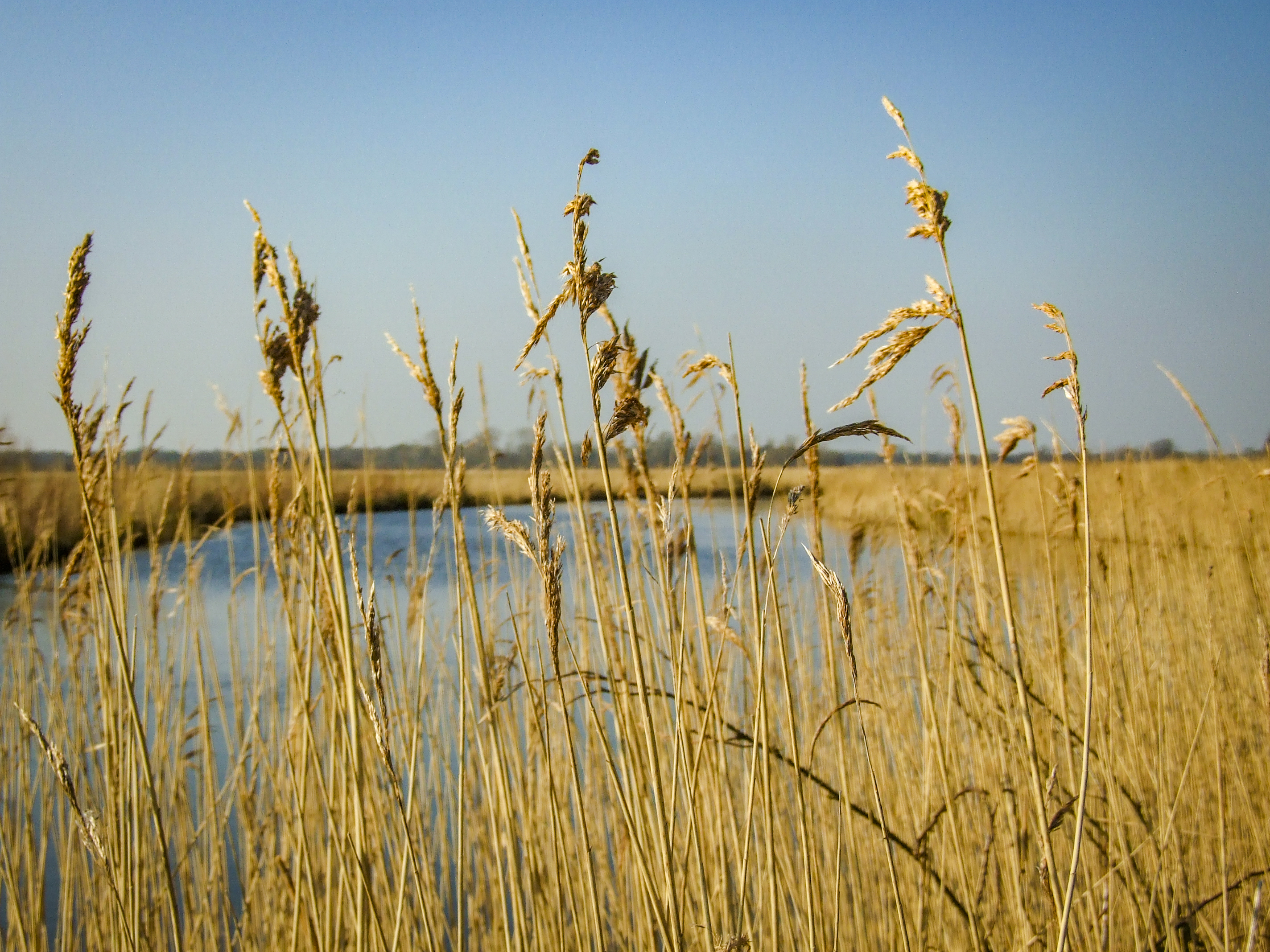 The grass grows tall in the sunshine by the river.jpg