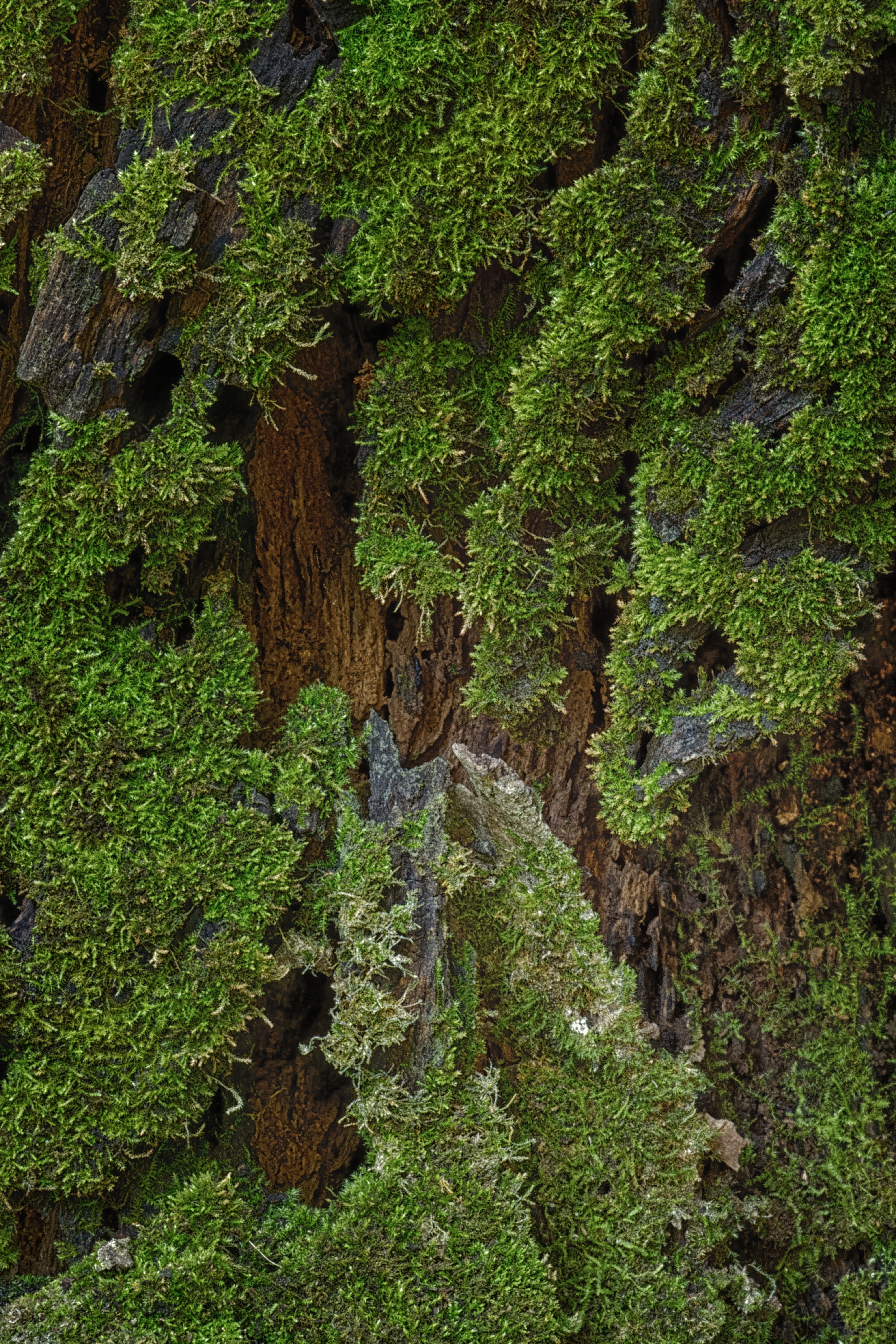 Moss in an old tree stump - 0176