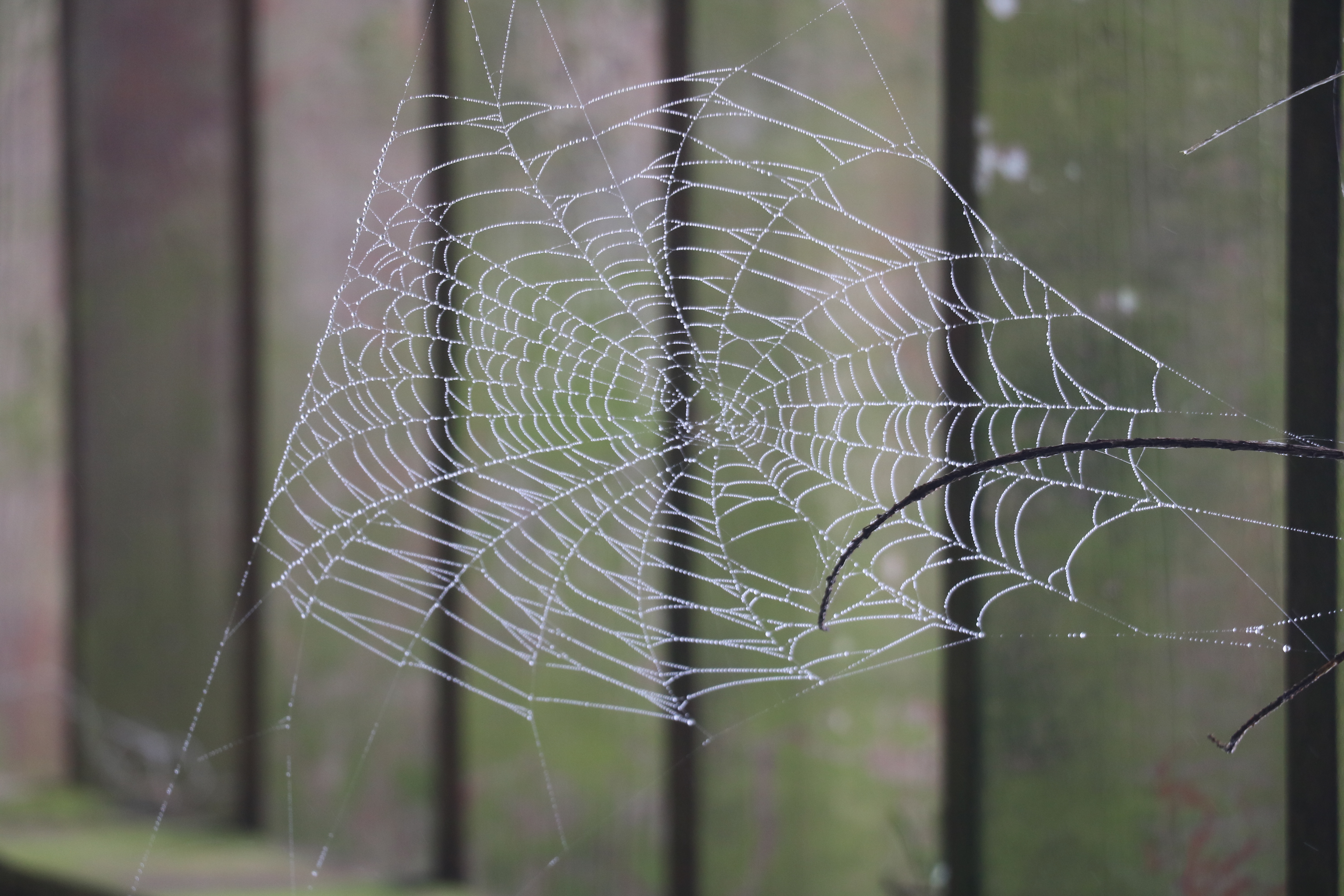 spider net rain drop